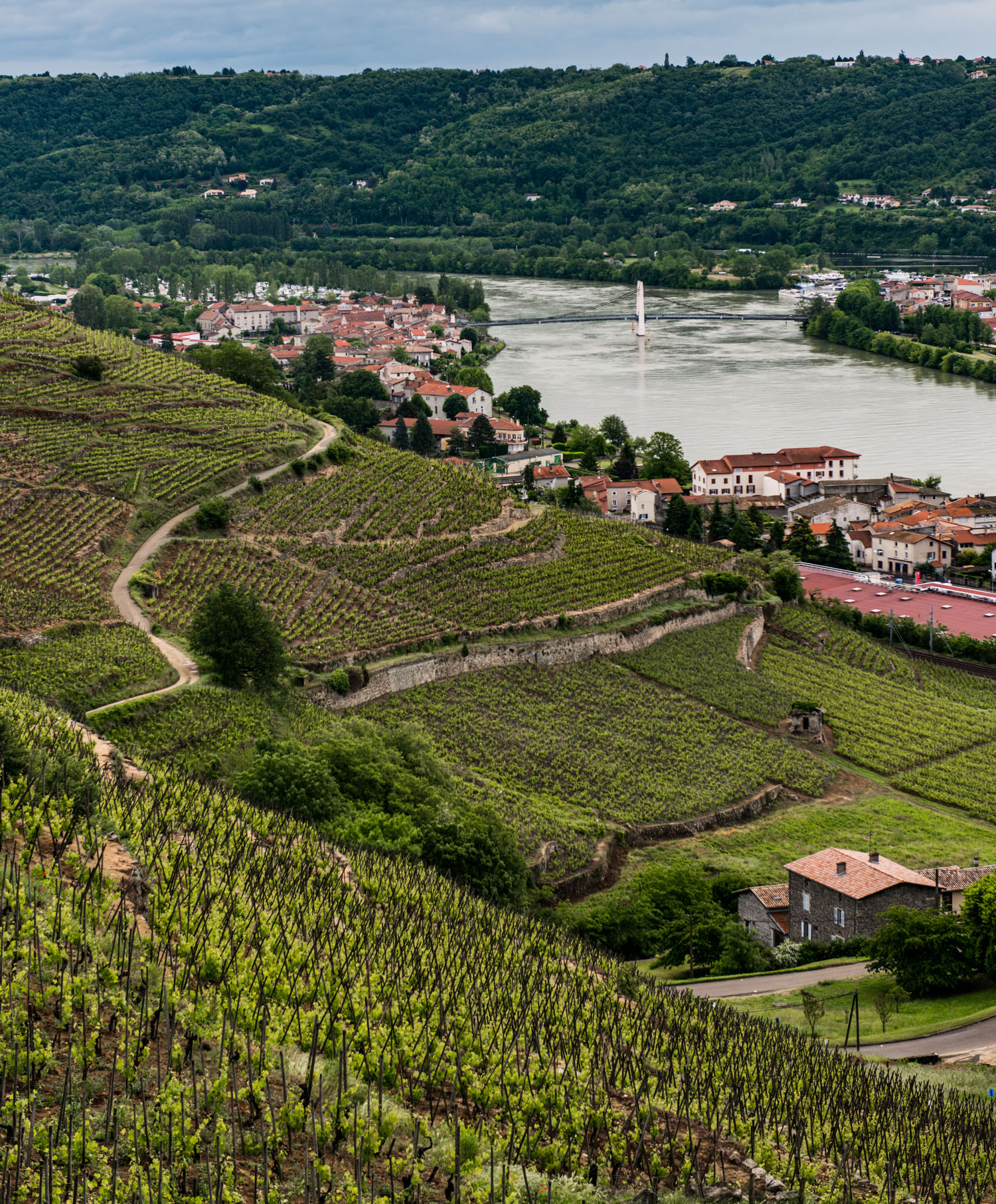 France : Northern Rhone : Alleau (front) and Vernon (back) vineyards in Condrieu