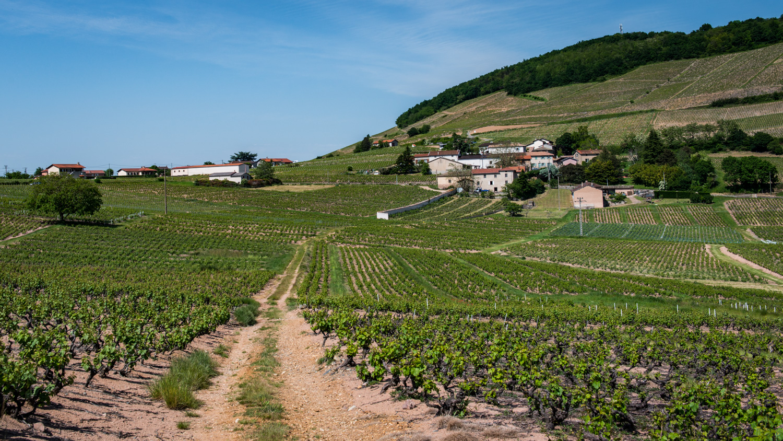 France : Beaujolais : Cote de Brouilly