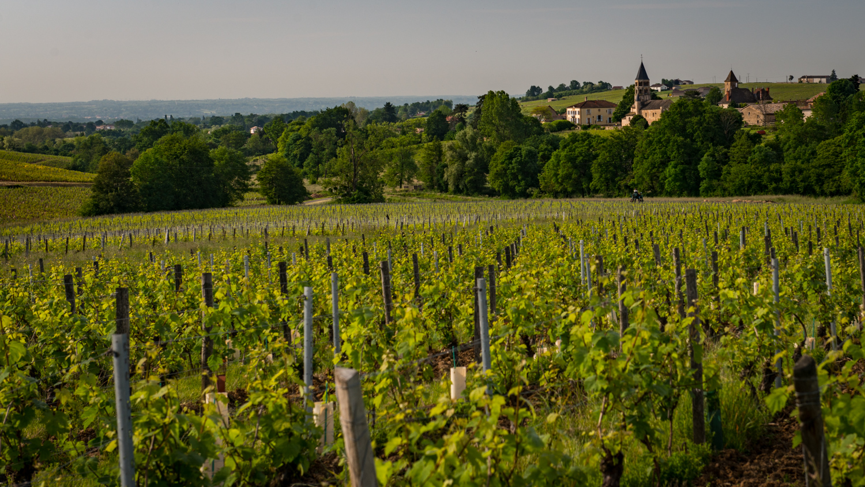 France : Beaujolais : Leynes
