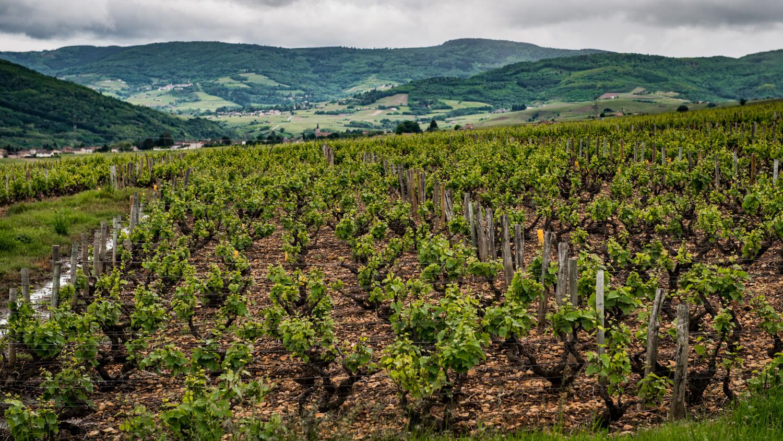 France : Beaujolais : Juliénas