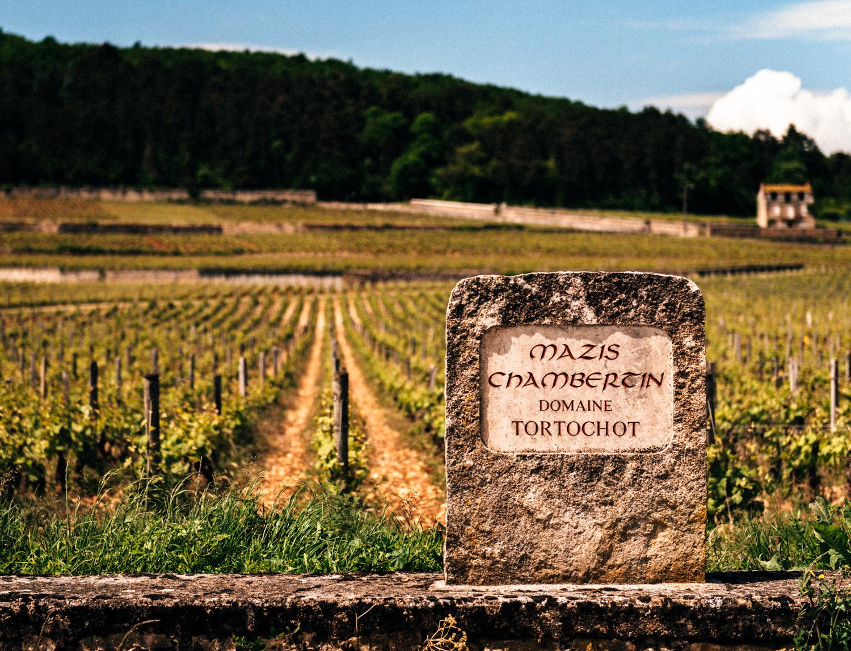 Burgundy : Cote de Nuits : Gevrey-Chambertin : Mazis-Chambertin
