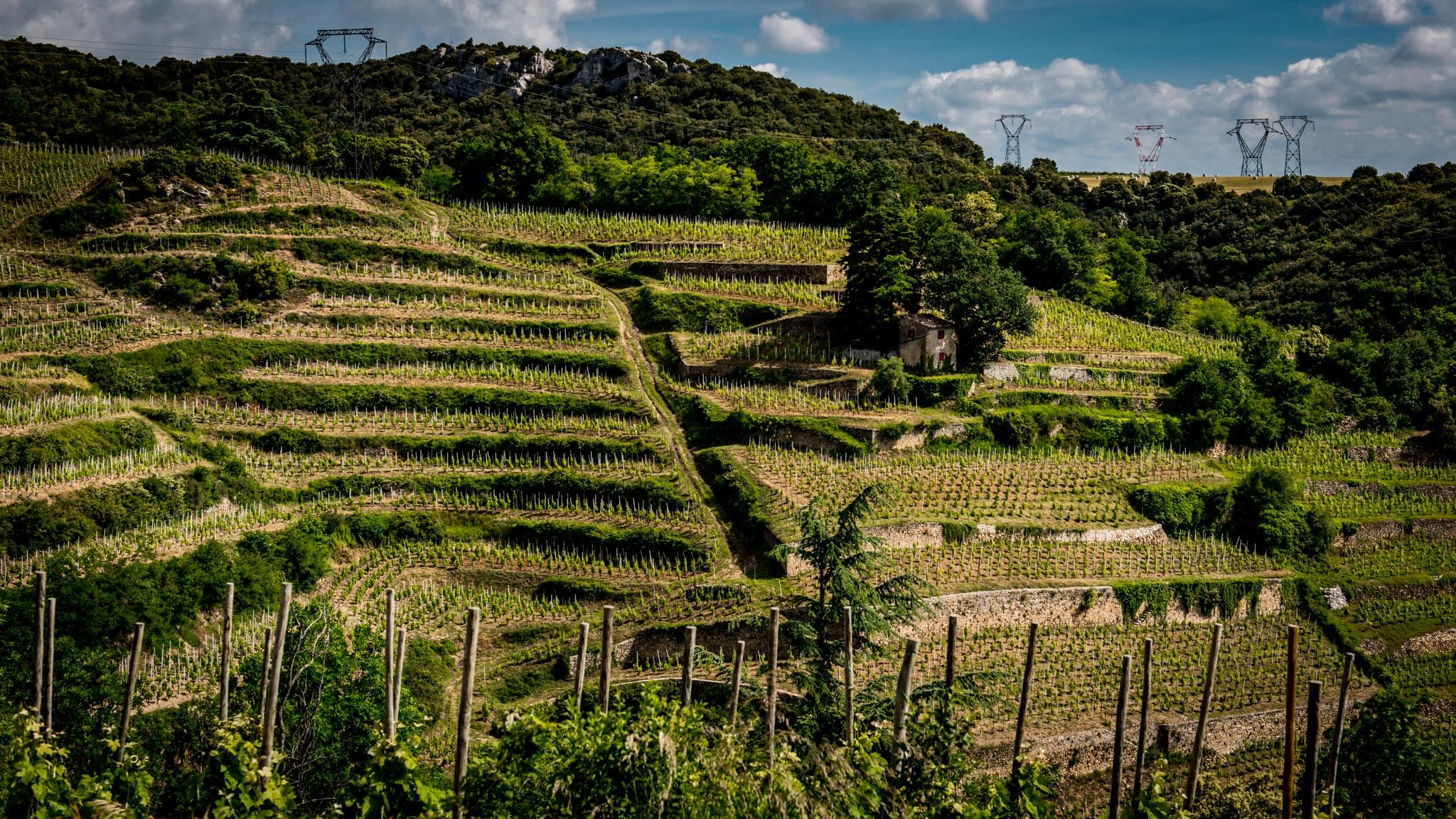 France : Northern Rhone : Chaillot vineyard in Cornas