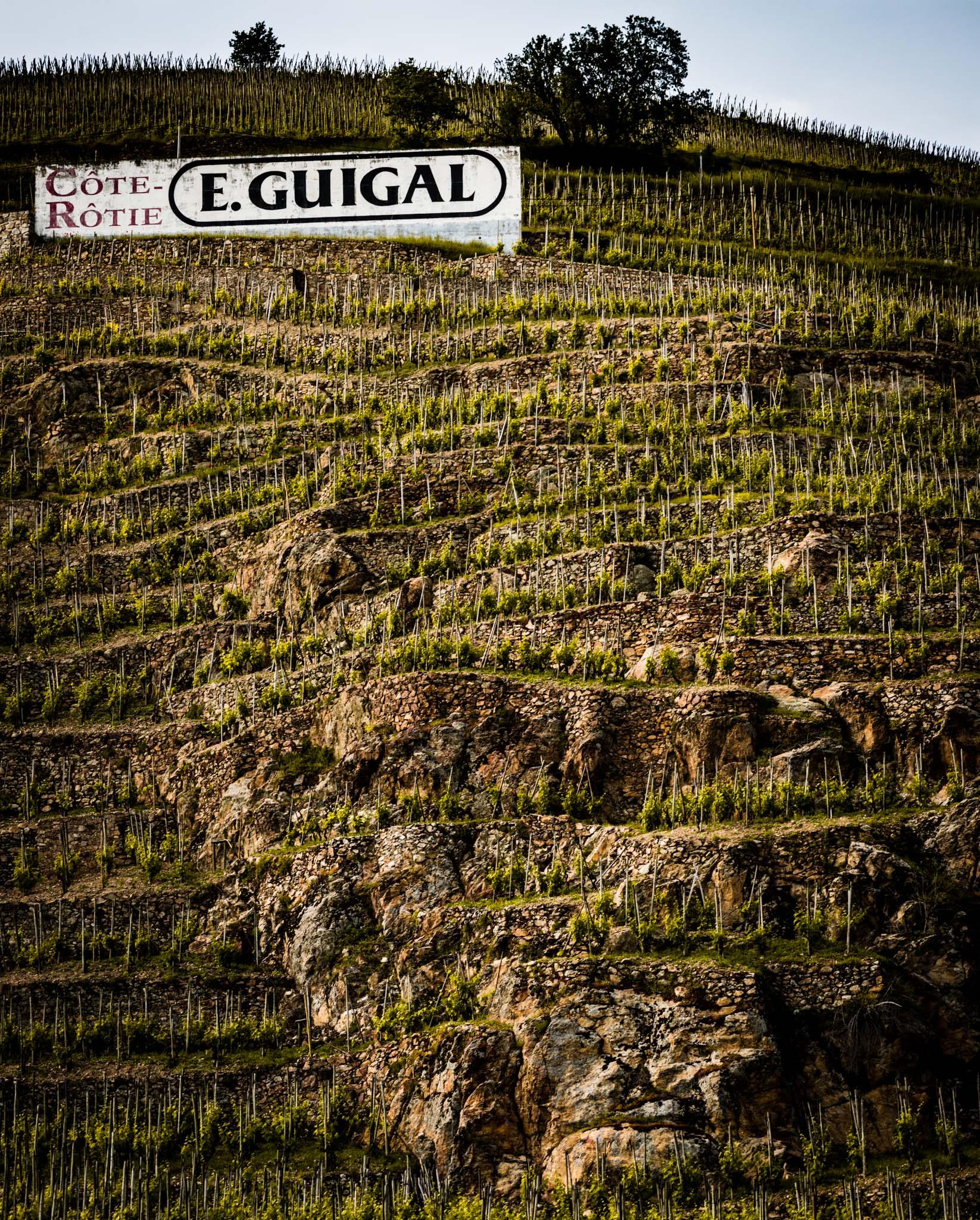 France : Northern Rhone : Guigal's La Mouline vineyard on the Cote Blonde in Cote Rotie