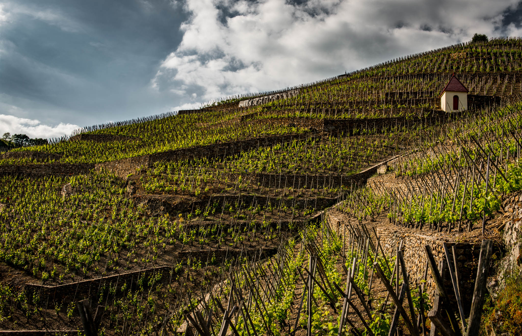 France : Northern Rhone : Guigal's plot for La Turque in Cote Rotie's Cote Brune