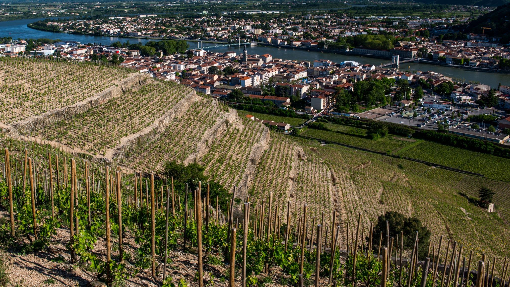 France : Northern Rhone : Hermitage's all-important Bessards vineyard