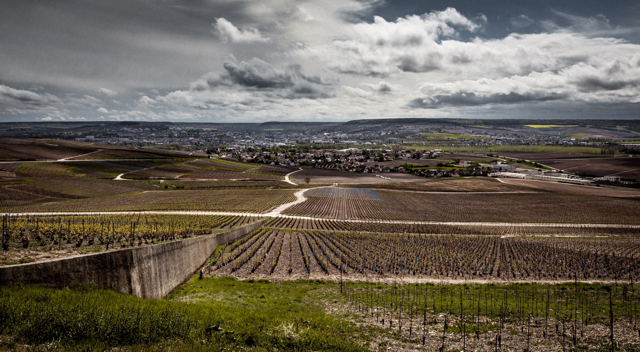 France : Champagne : Vineyards outside the village of Dizy