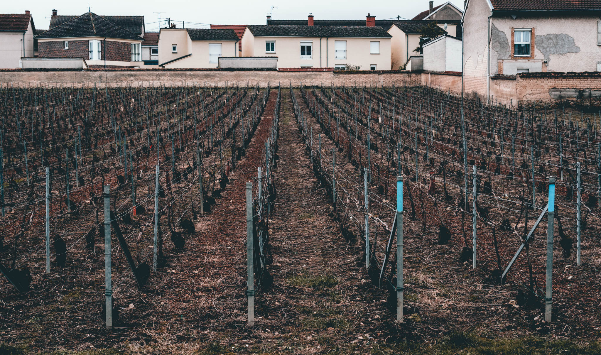 France : Champagne : Walled vineyard behind Barnaut in Bouzy