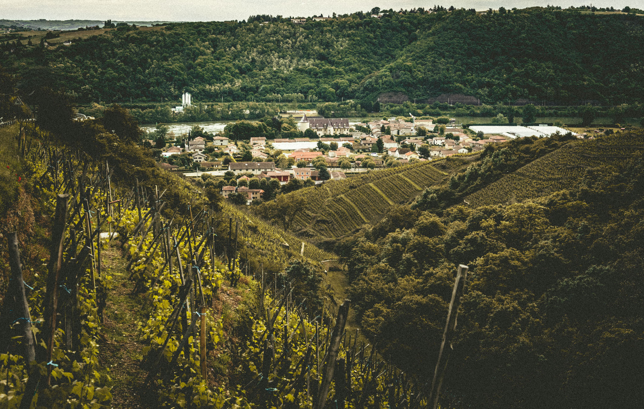 France : Northern Rhone : Village of Ampuis as seen from Moutonnes and Grand Taillis vineyards in Cote Rotie