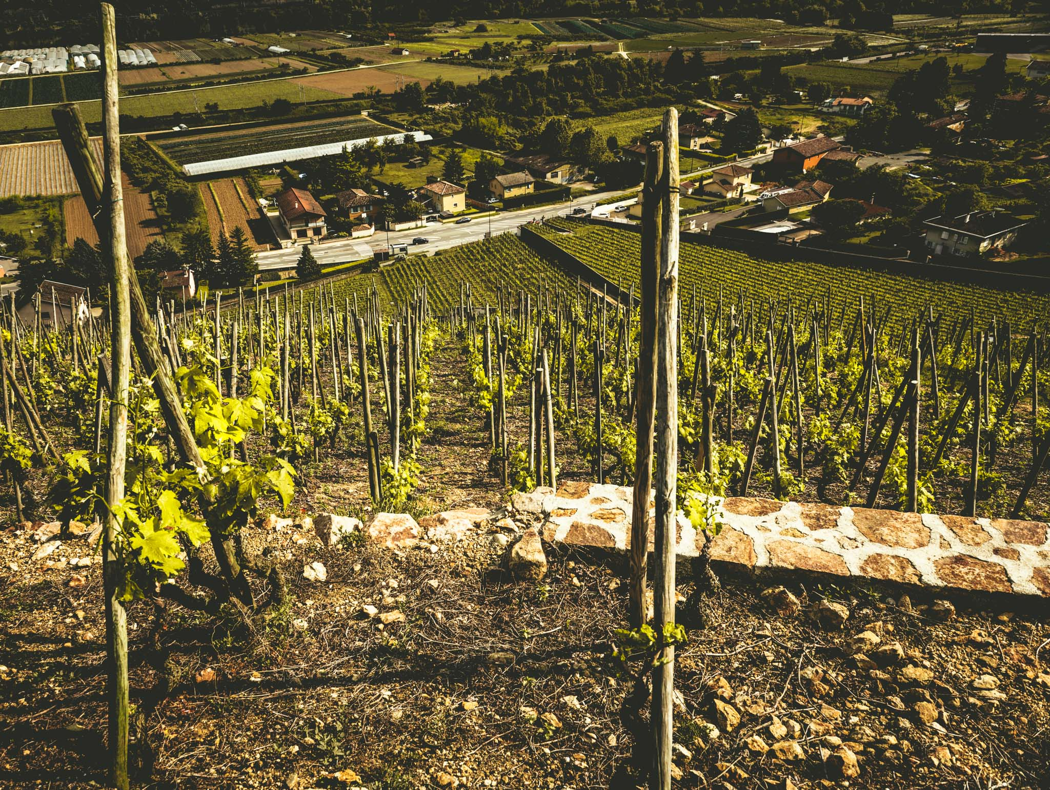 France : Northern Rhone : A view from the top of Cote Rotie's Cote Blonde