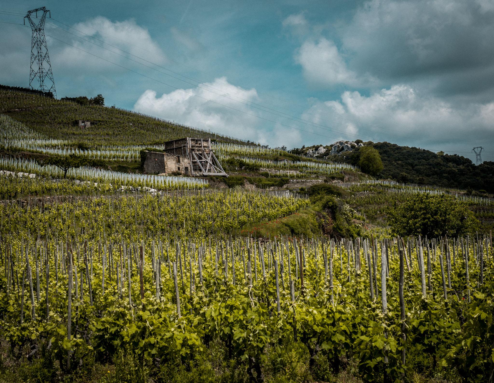 France : Northern Rhone : Cornas