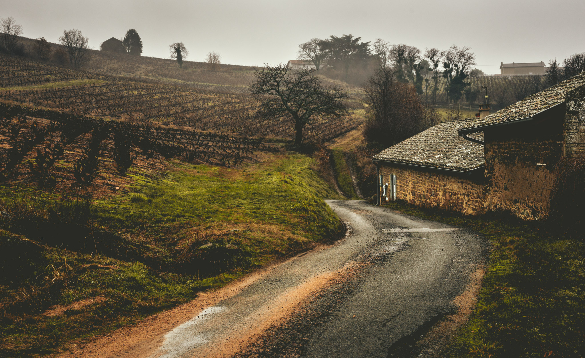 France : Beaujolais : A moody side of Beaujolais in the Cote de Brouilly