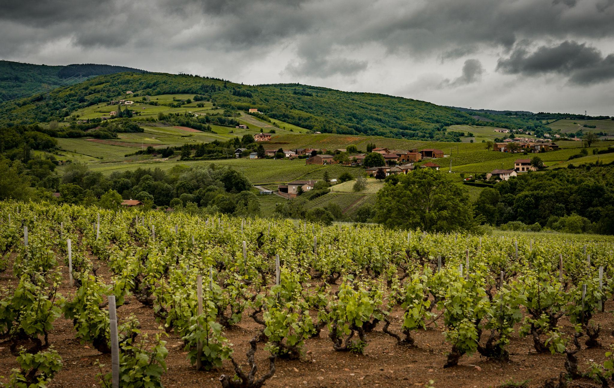 France : Beaujolais : Saint-Amour