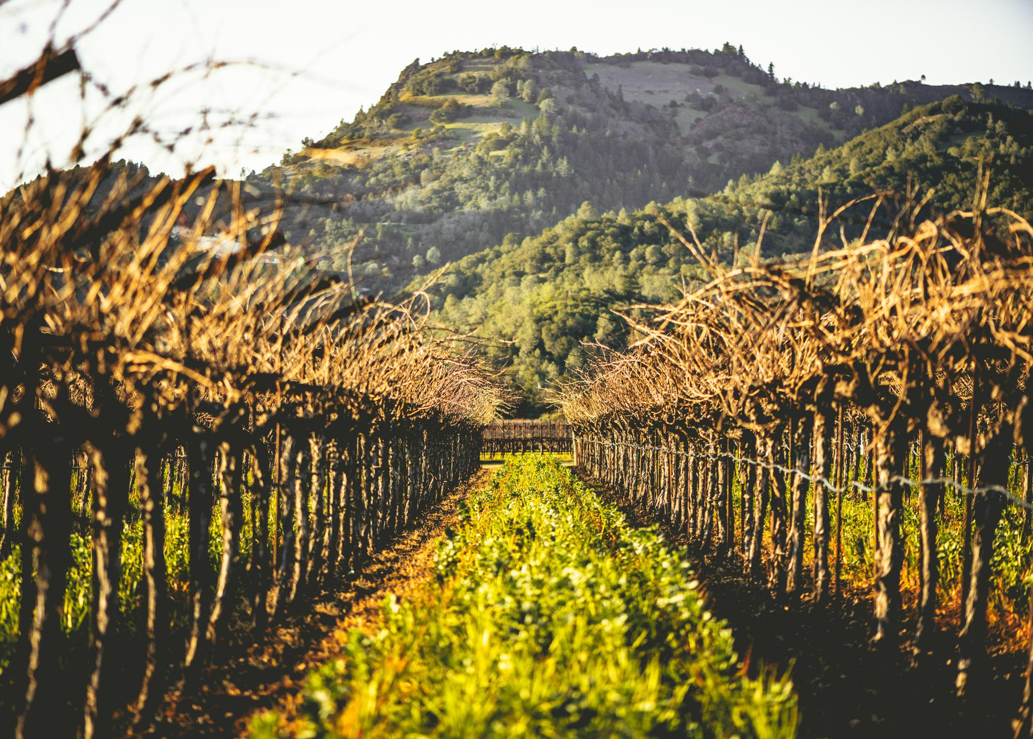 California : Napa Valley : Calistoga