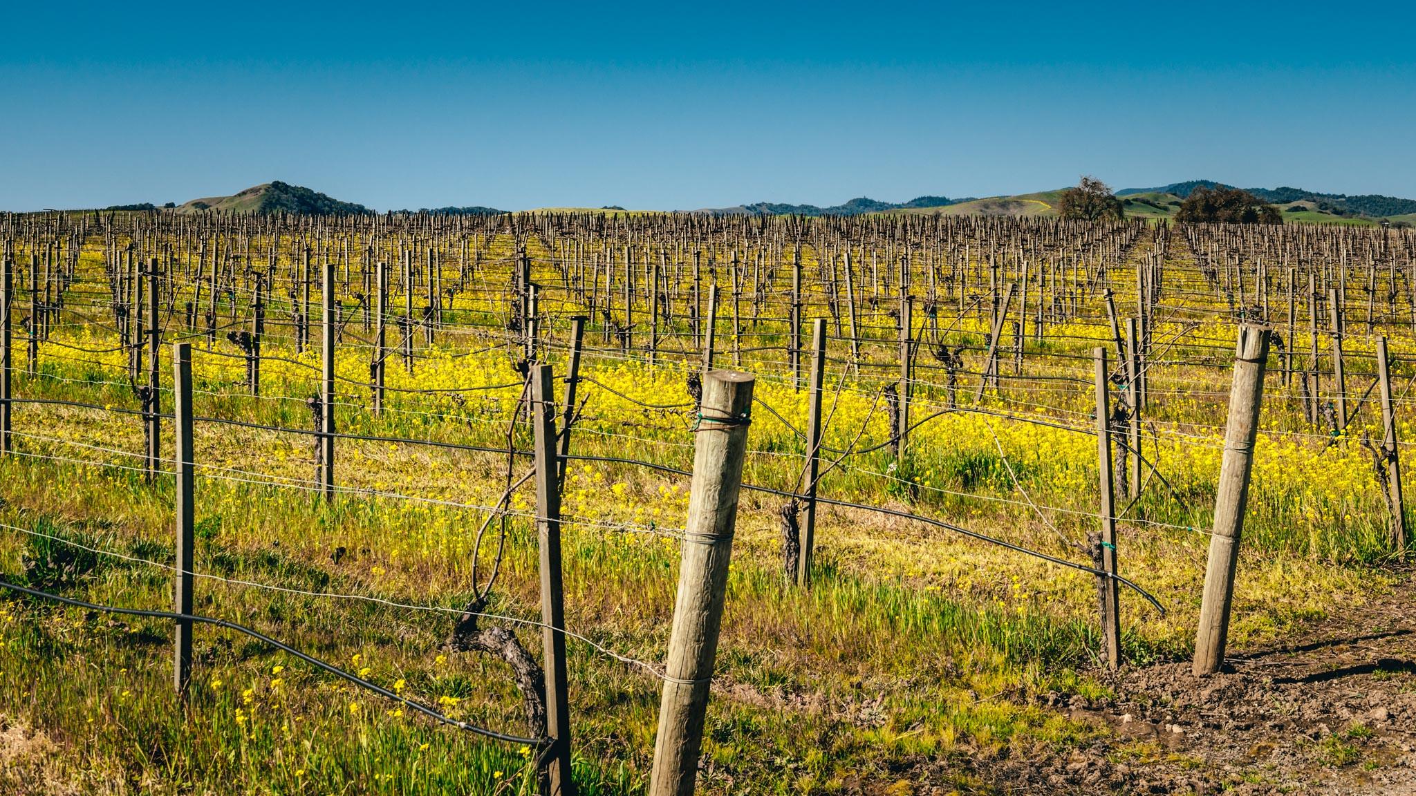 California : Napa Valley : Carneros