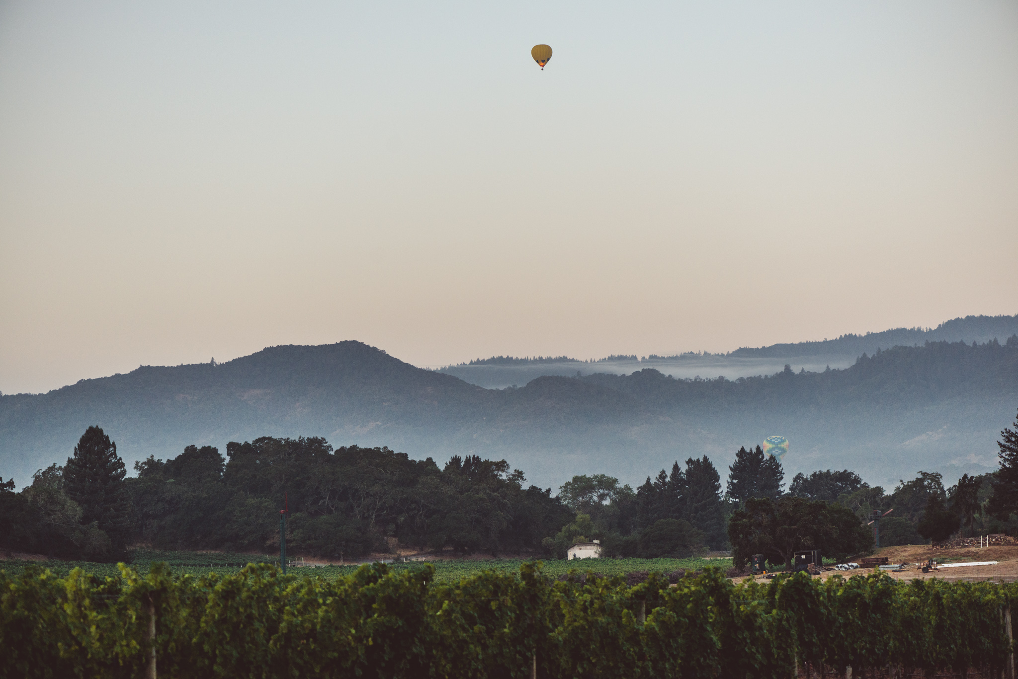 California : Napa Valley : Fog and a balloon over Stags Leap District and Yountville