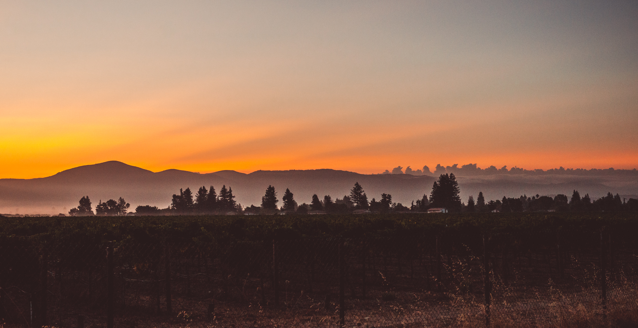 California : Napa Valley : Sunrise over Oak Knoll