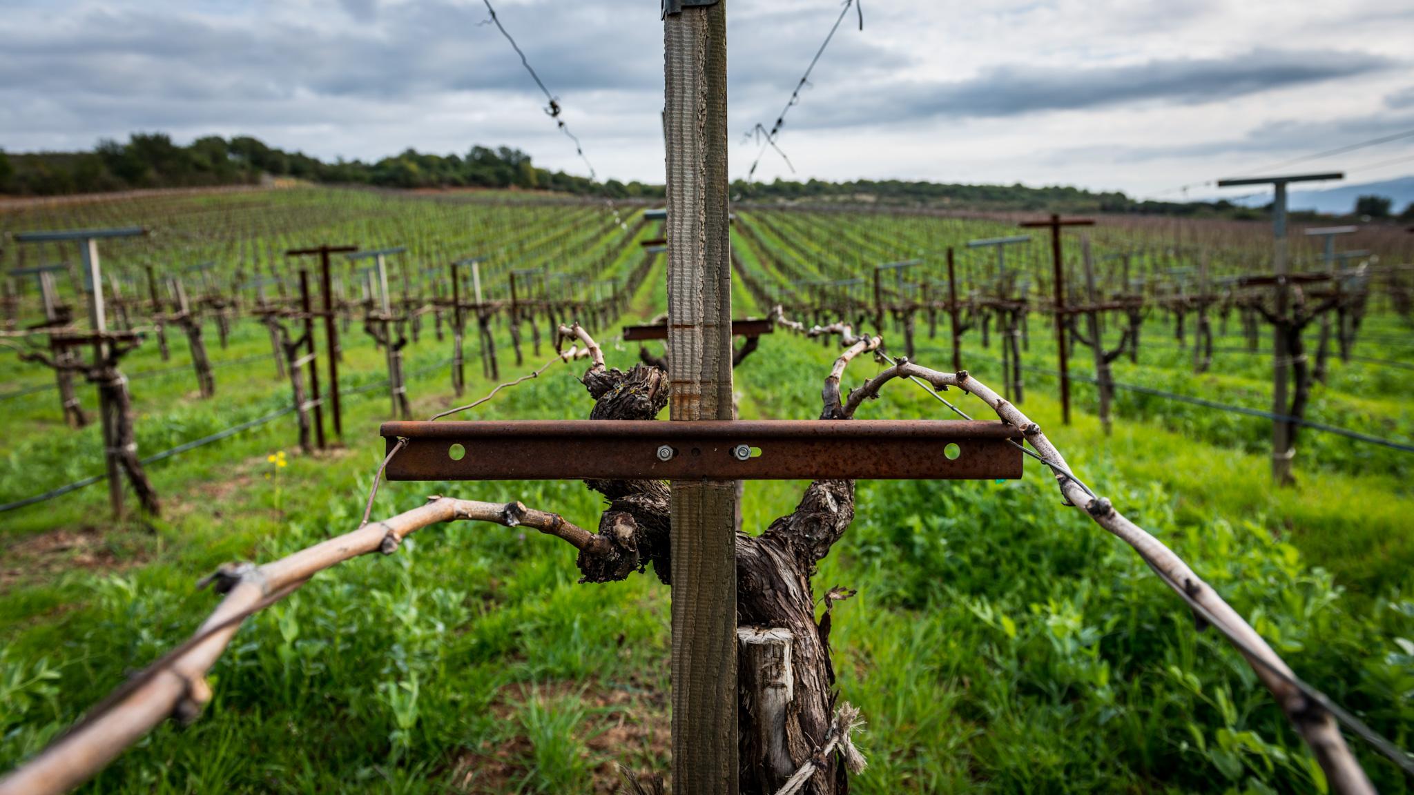 California : Napa Valley : David Arthur Vineyards on top of Pritchard Hill