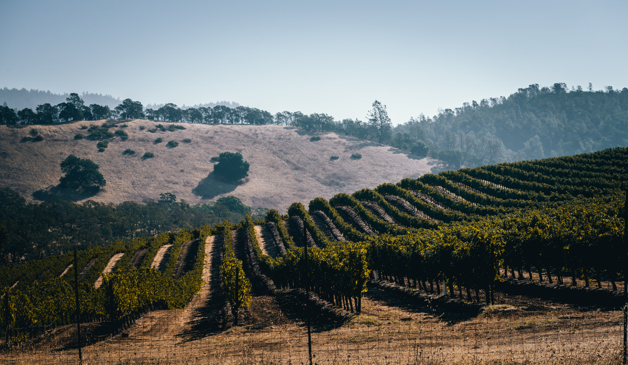 California : Napa Valley : The view along Conn Valley Rd