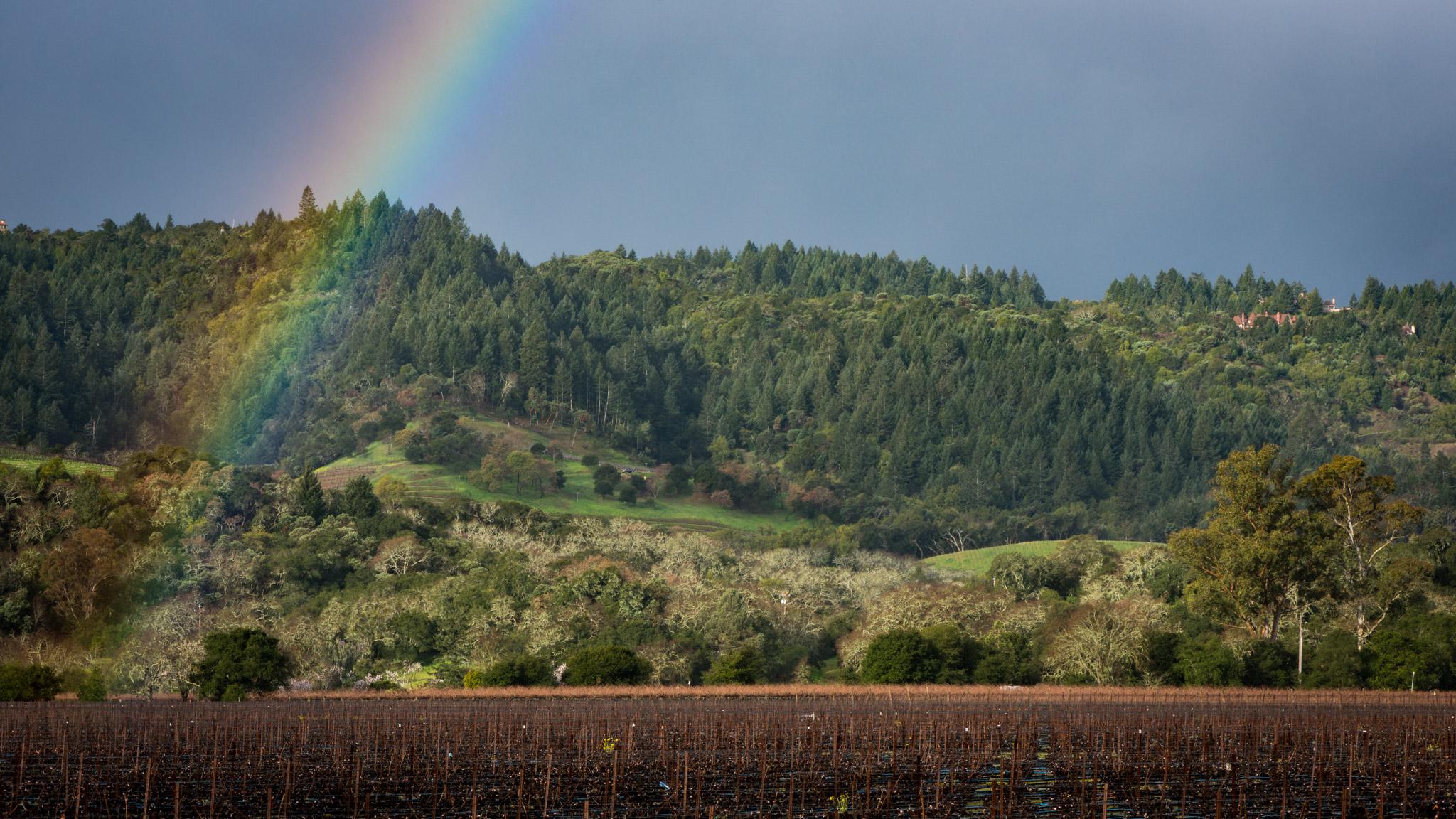 California : Napa Valley : After the rain
