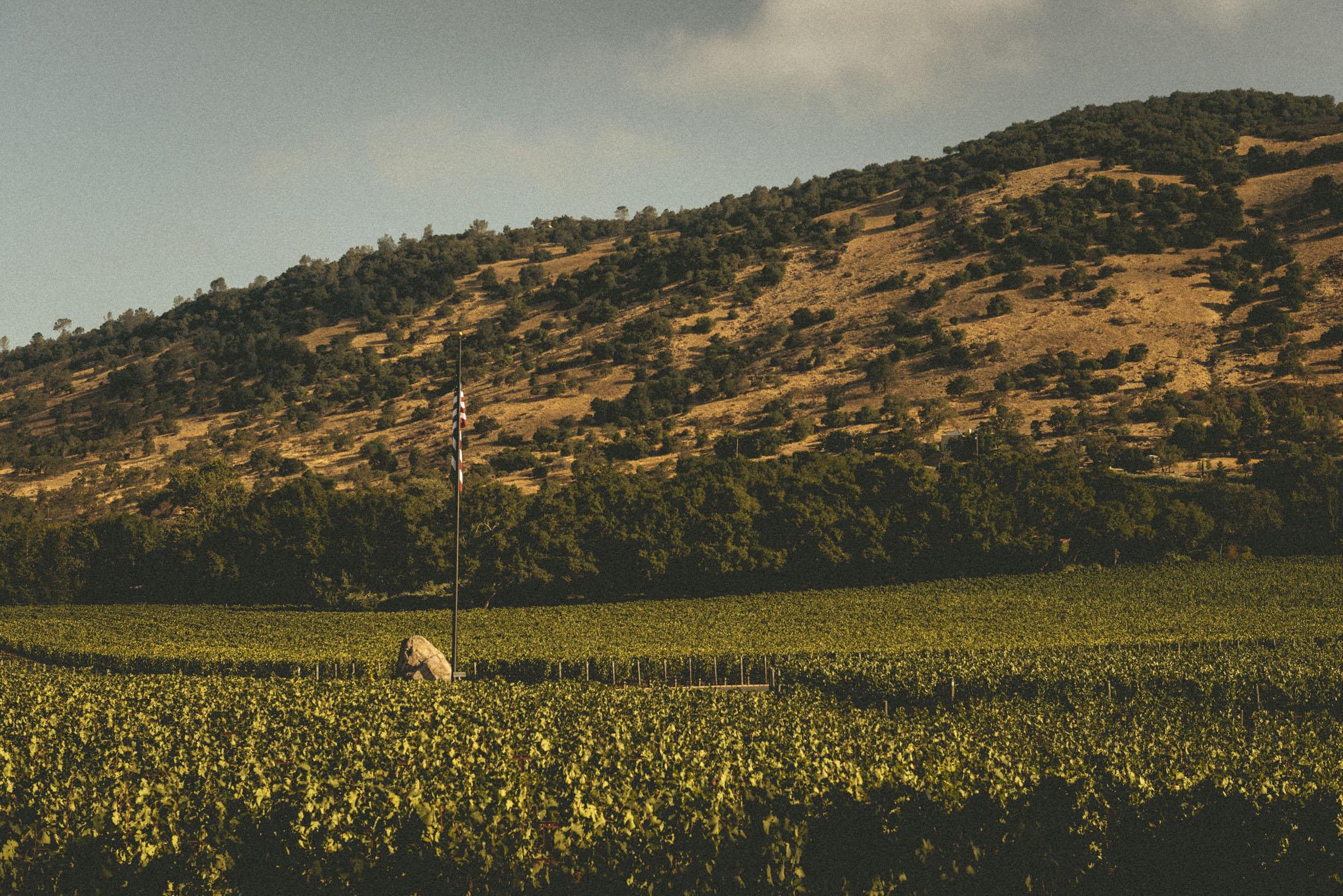 California : Napa Valley : Rudd's vineyard along Oakville Crossroad