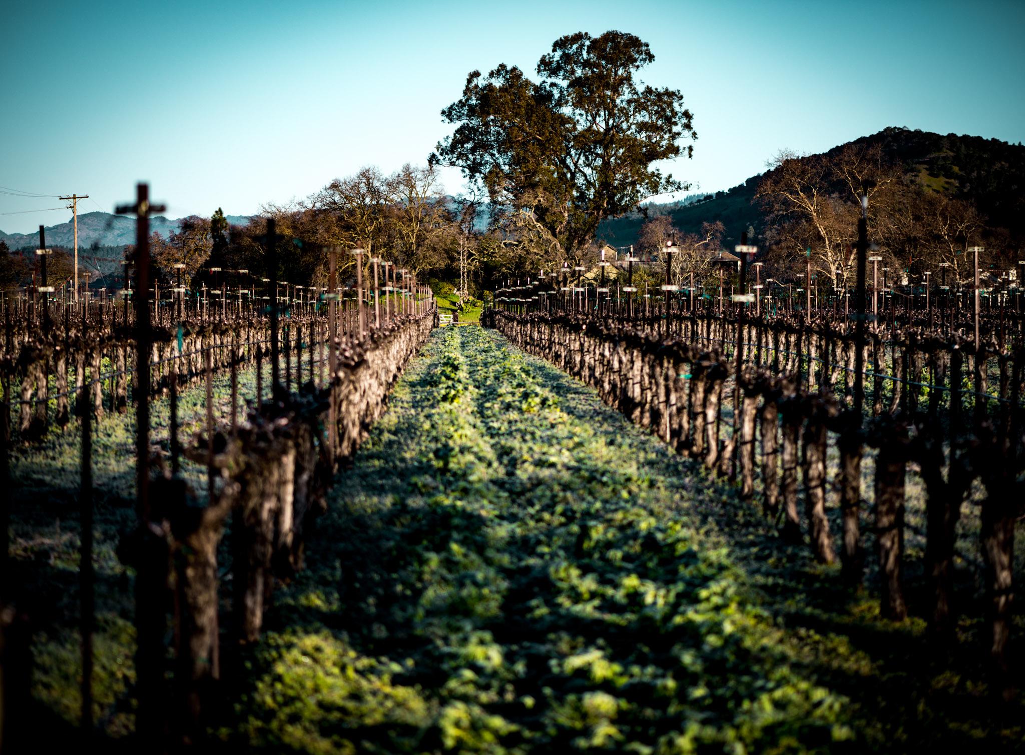 California : Napa Valley : Oakville Crossroad