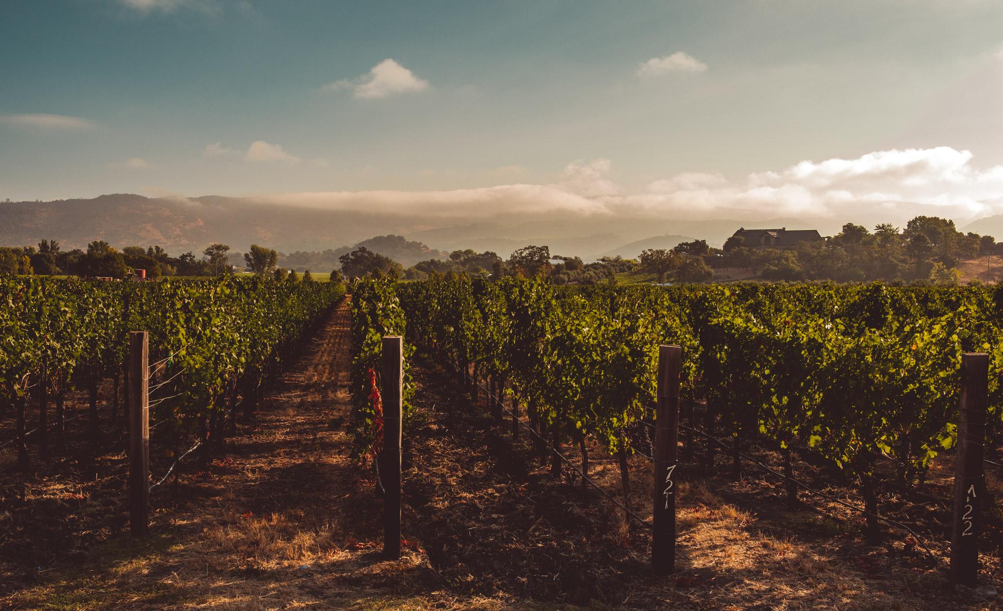California : Napa Valley : Oakville