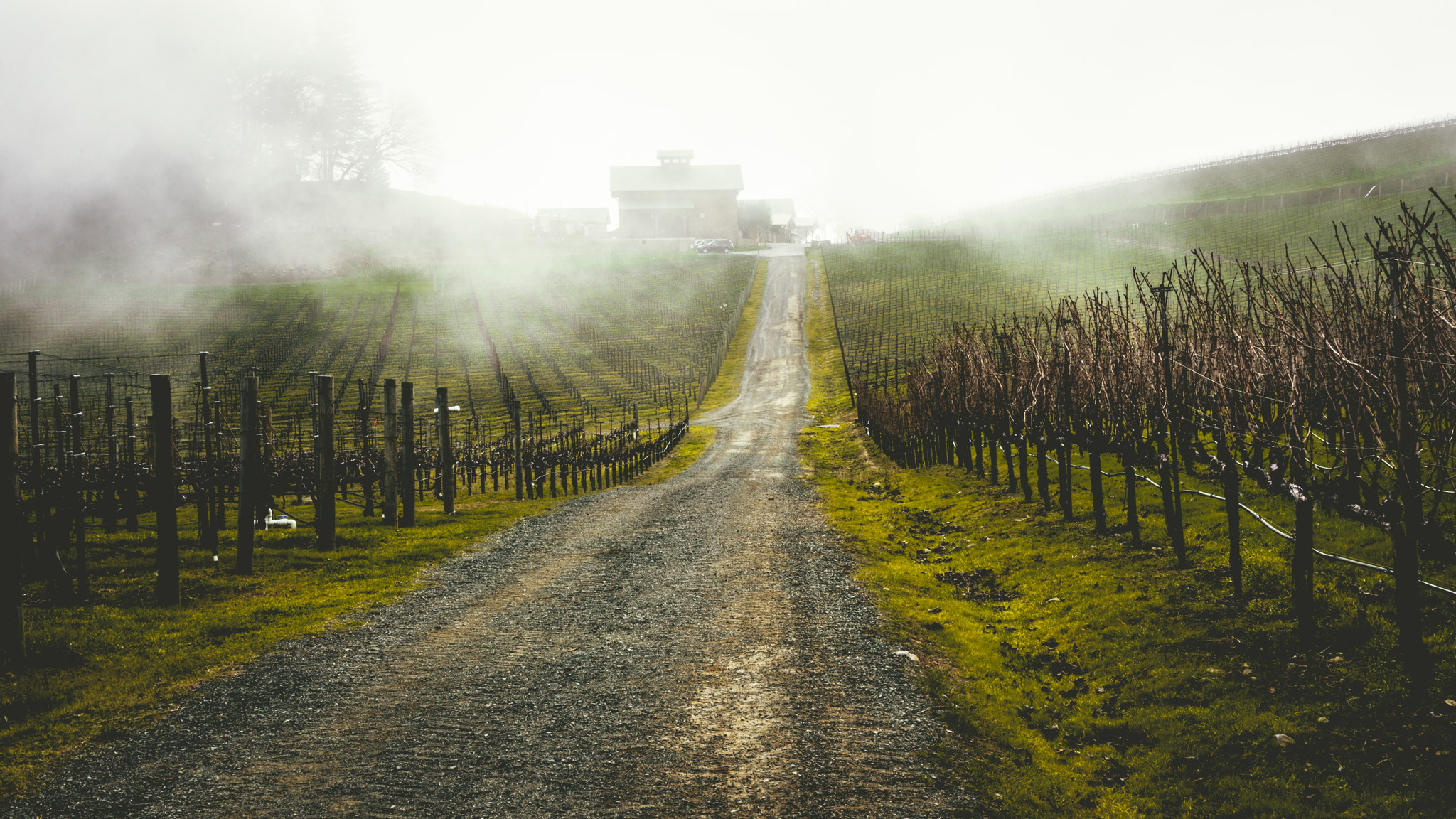 California : Napa Valley : Pride Mountain Vineyards on Spring Mountain