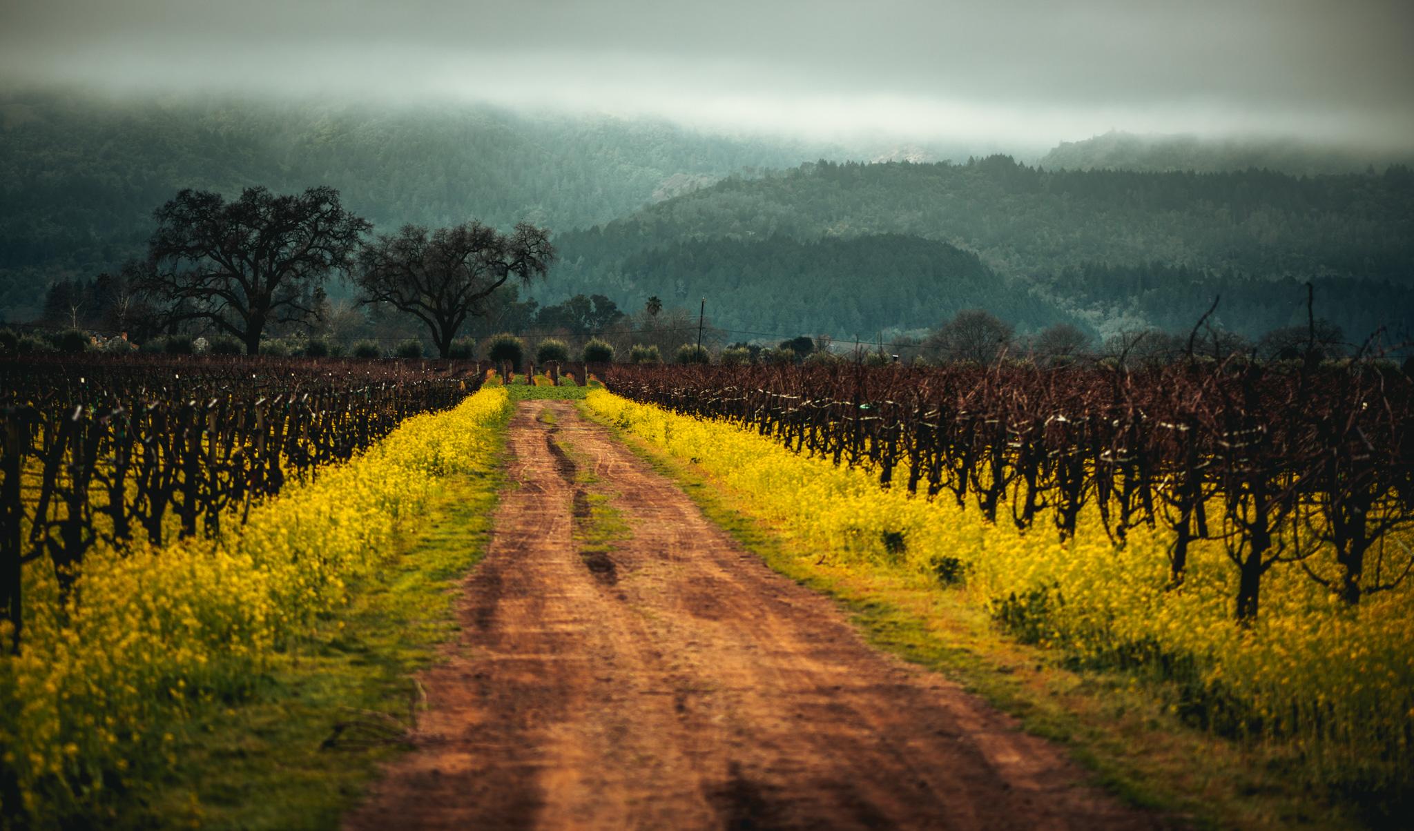 California : Napa Valley : Rutherford