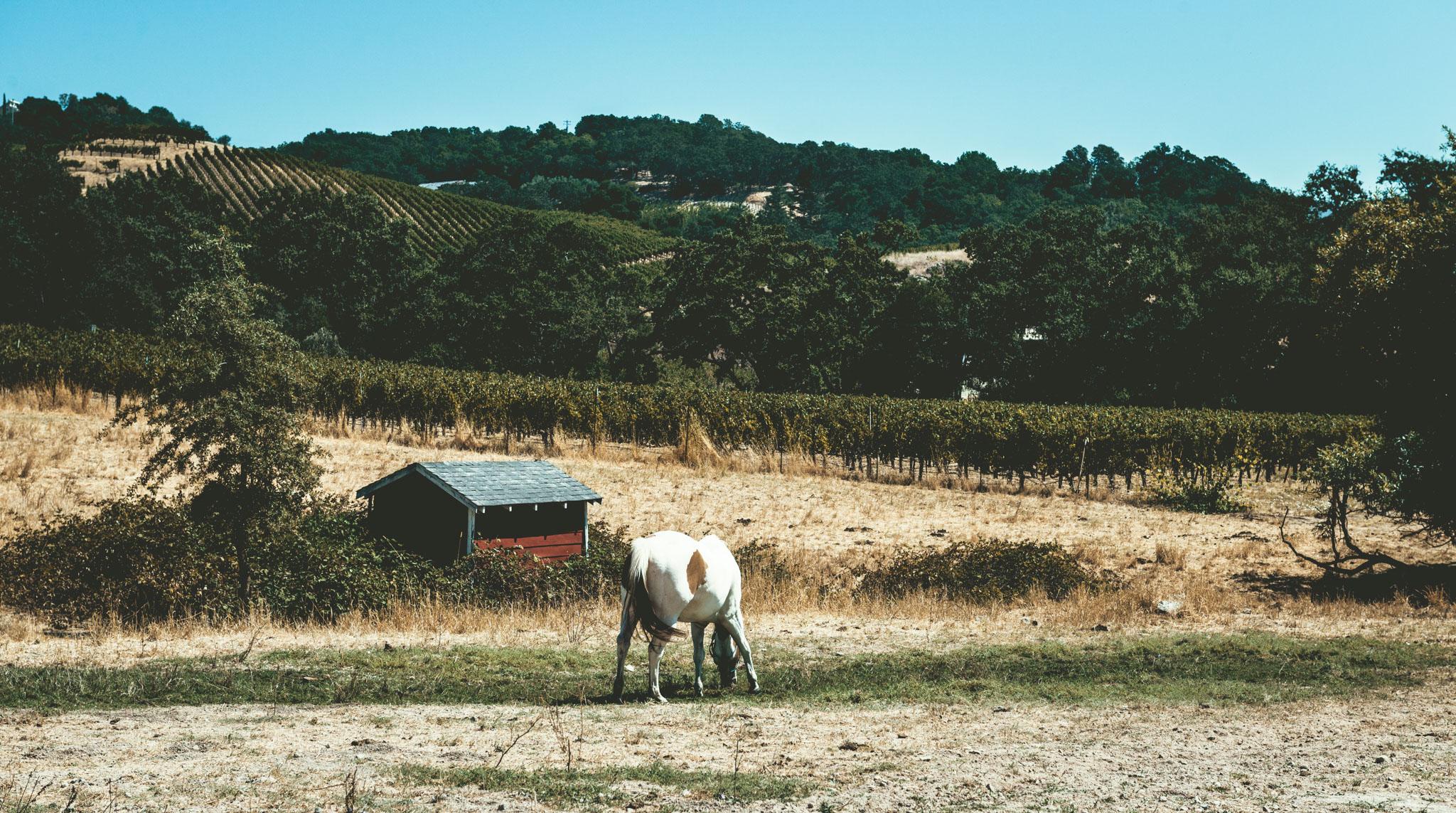 California : Napa Valley : Seavey Vineyard