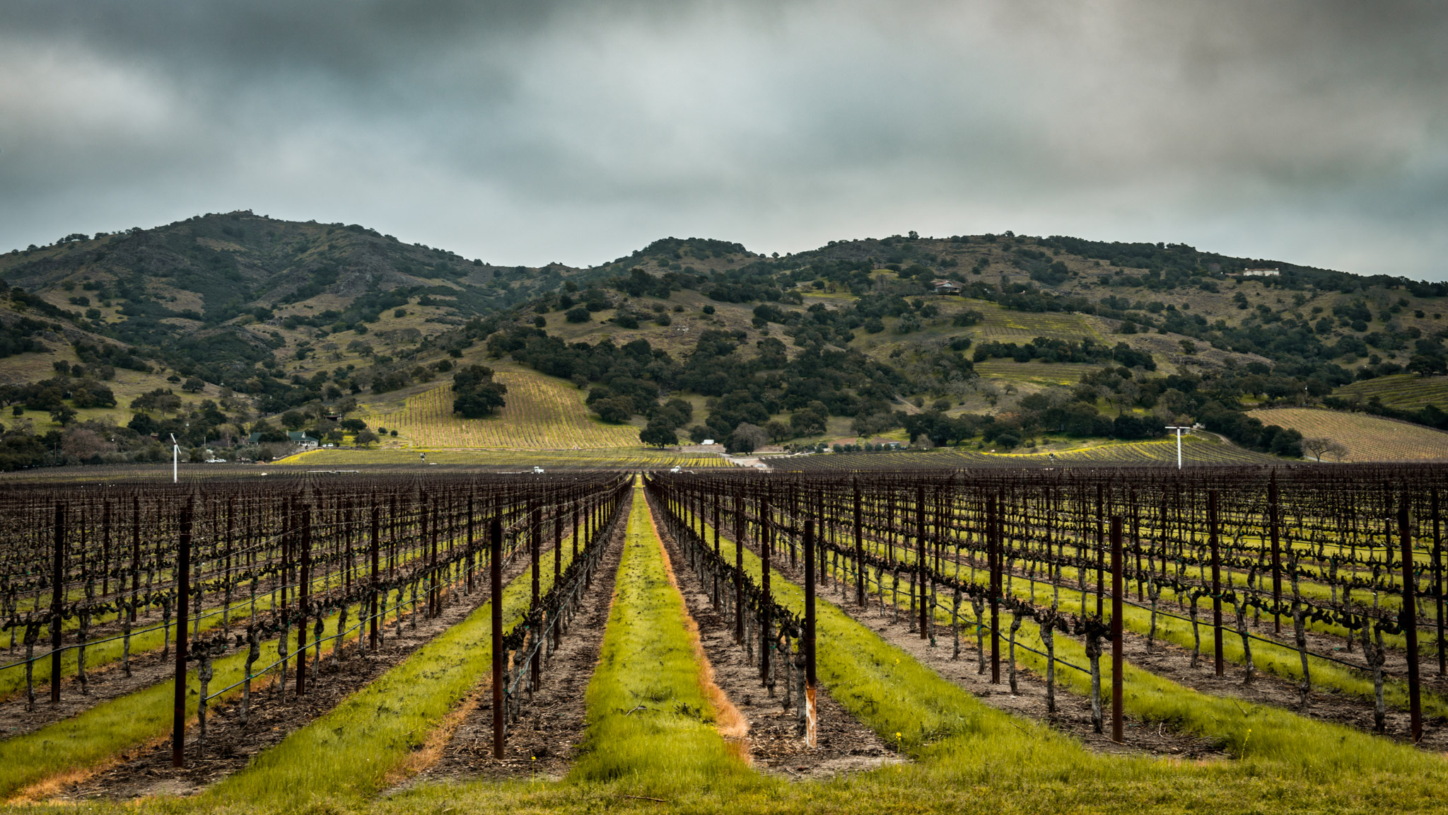 California : Napa Valley : Stags Leap District