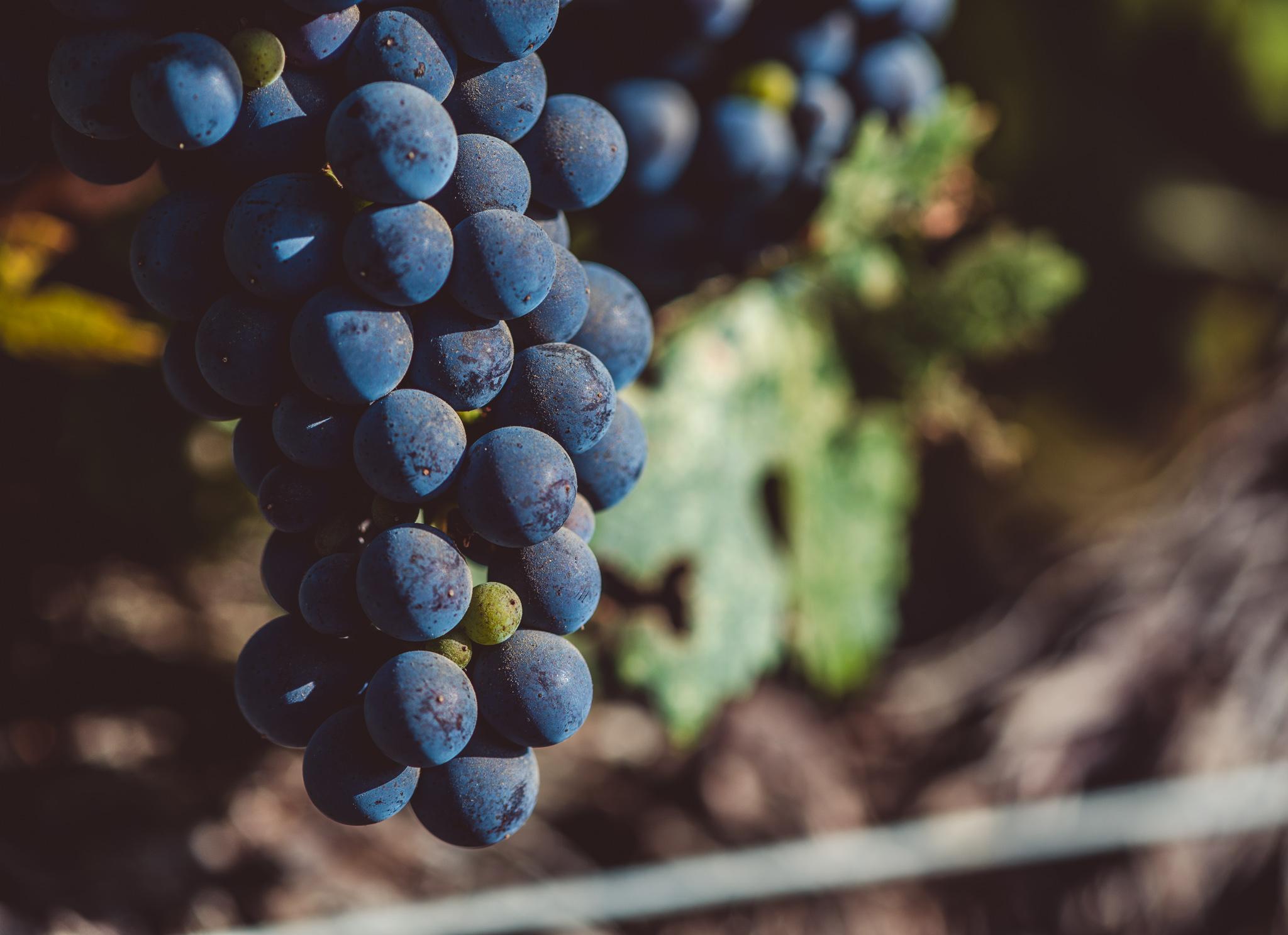 California : Napa Valley : Cabernet Sauvignon