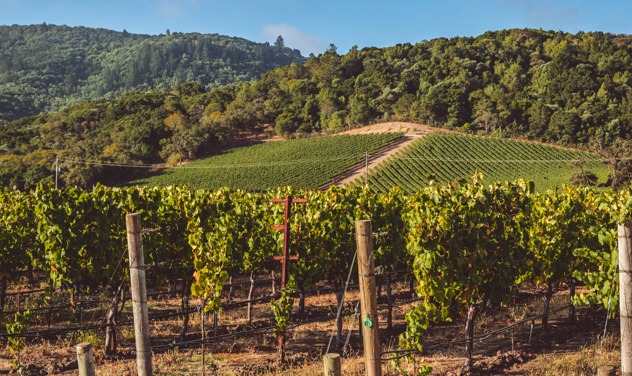 California : Napa Valley : Vine Hill Ranch in Oakville