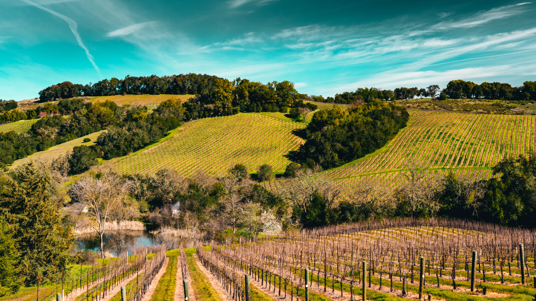 California : Sonoma : Chalk Hill