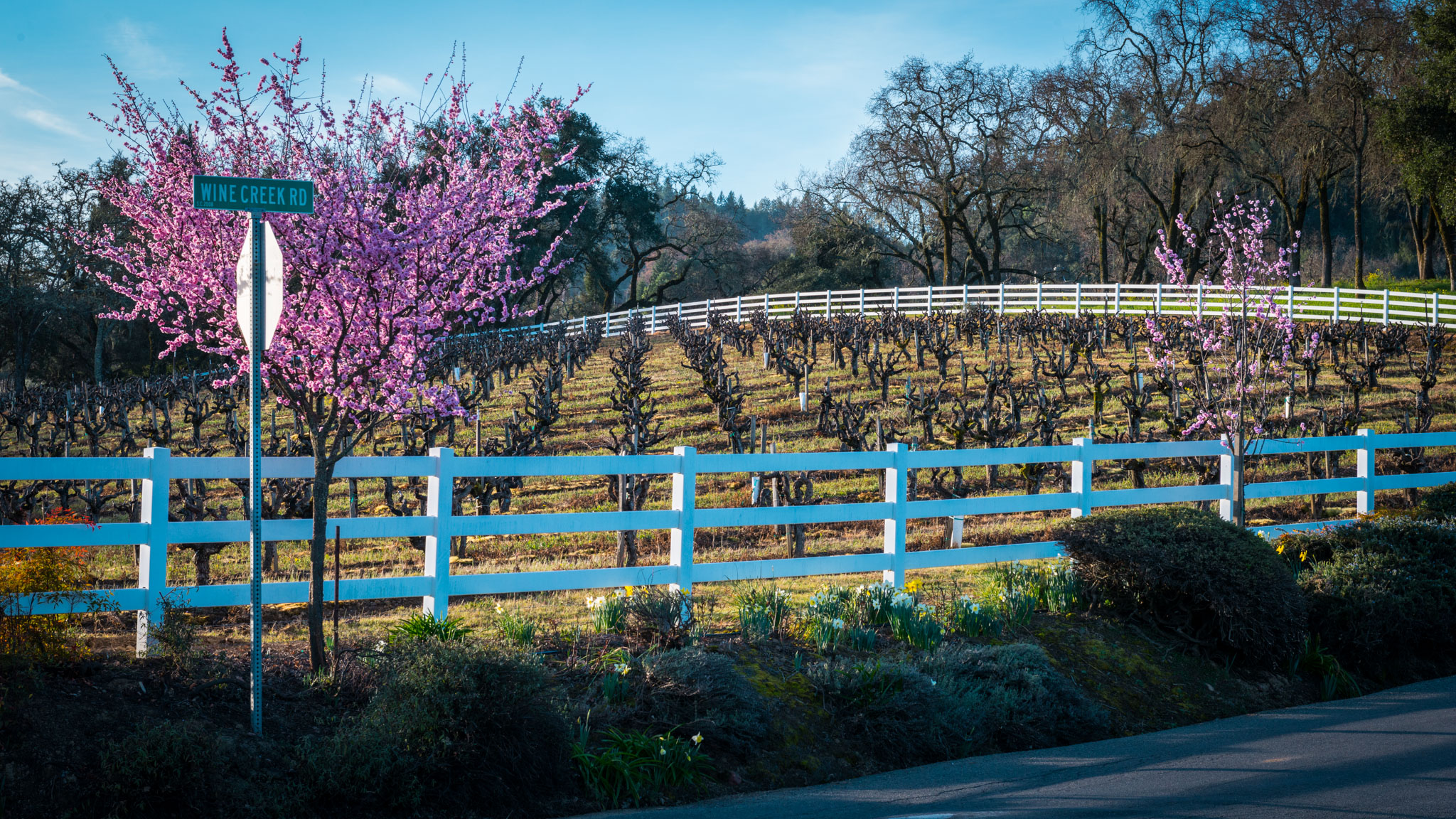 California : Sonoma : Dry Creek Valley