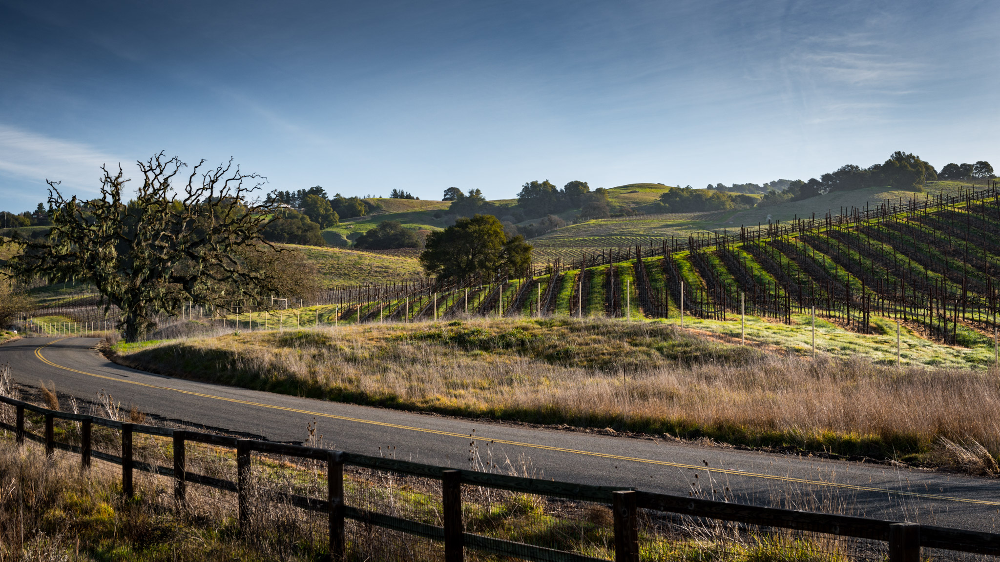 California : Sonoma : Vineyards north of Petaluma