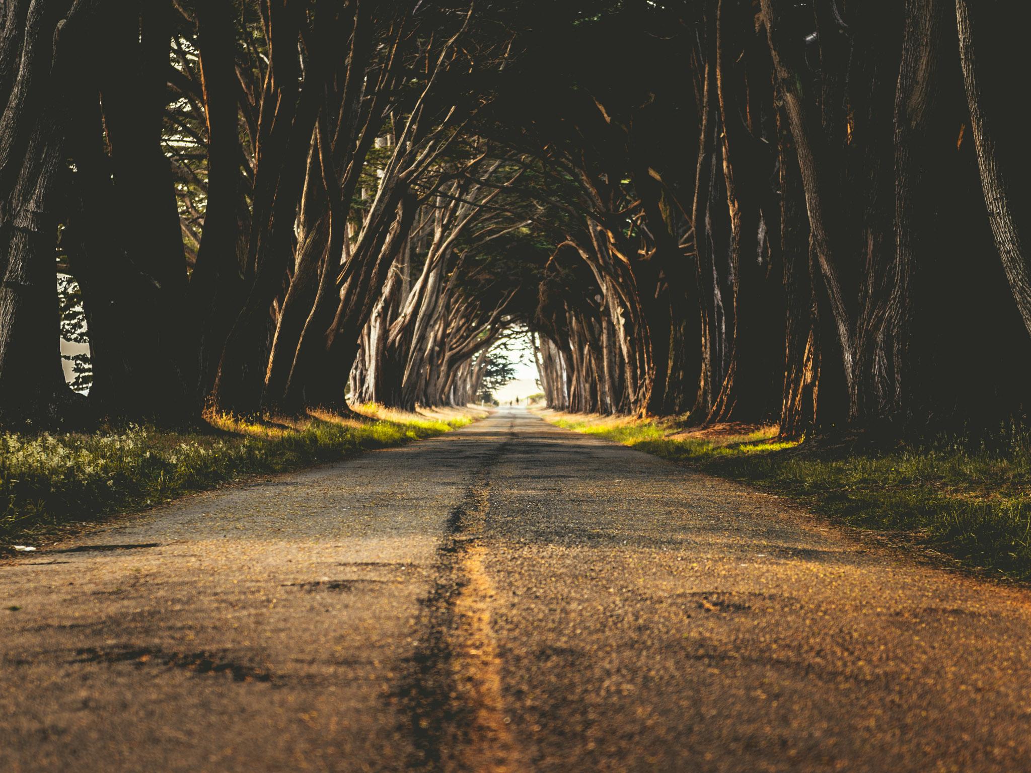 California : Point Reyes : Cypress Tree Tunnel