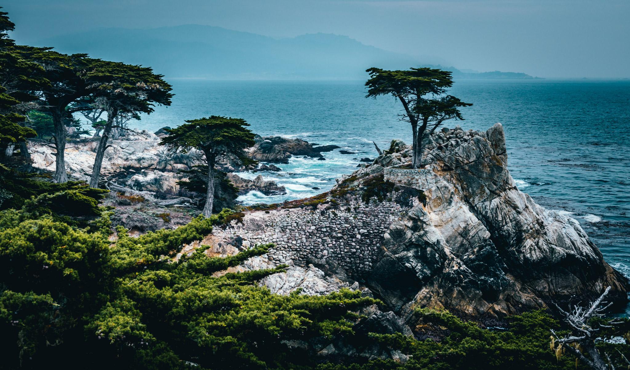 California : Monterey : The Lone Cypress