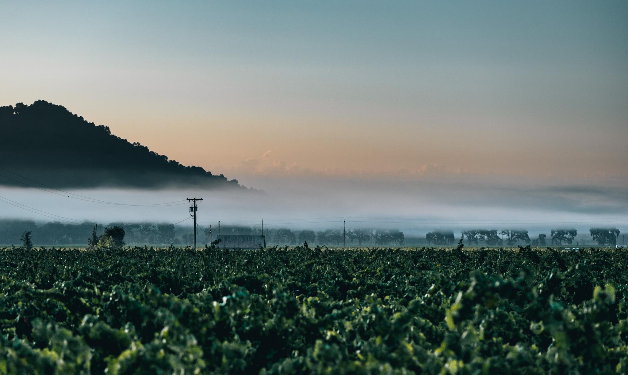 California : Napa Valley : Yountville Crossroad