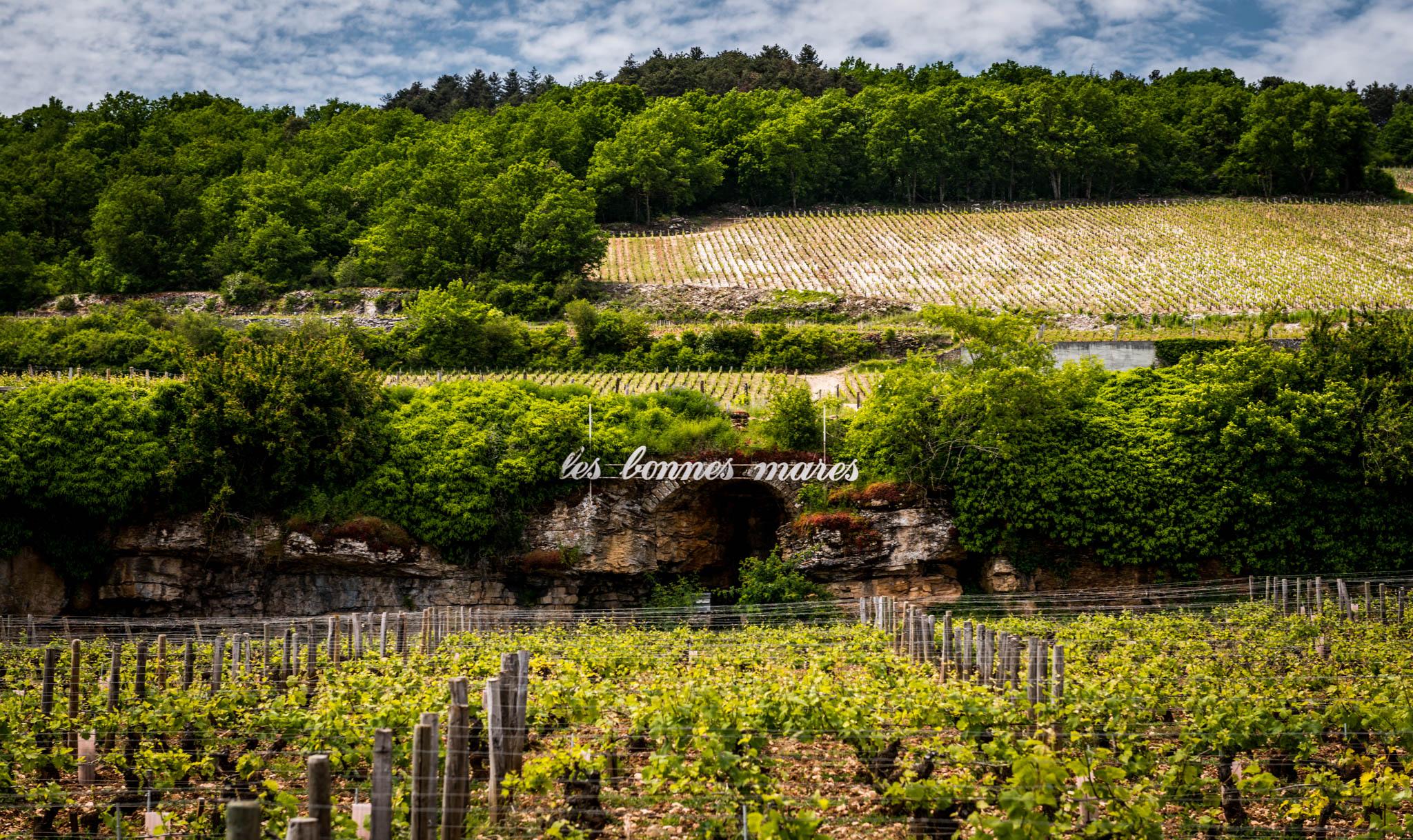 Burgundy : Cote de Nuits : Morey-St-Denis : Bonnes Mares grand cru