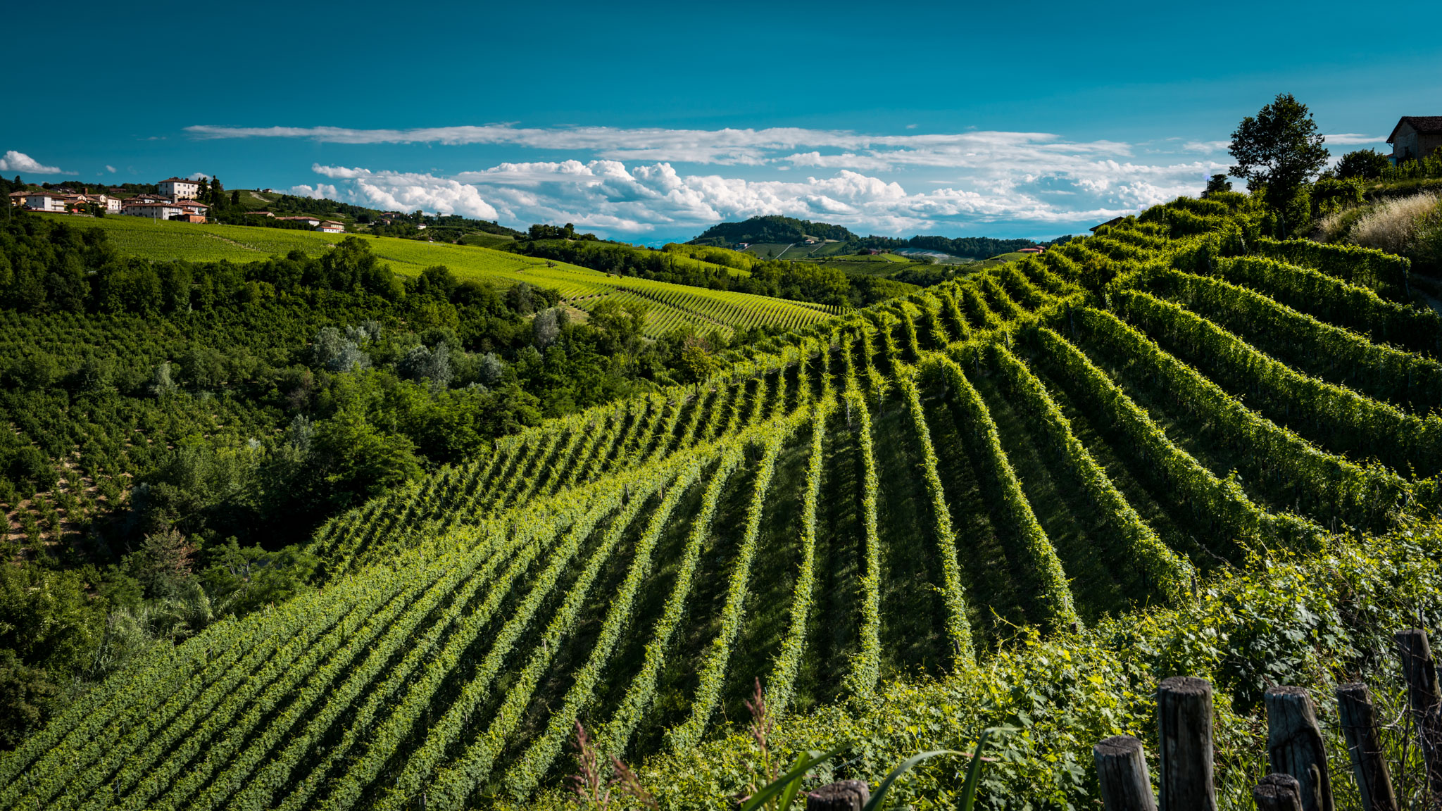 Italy : Piedmont : Rocche vineyard in Castiglione Falletto