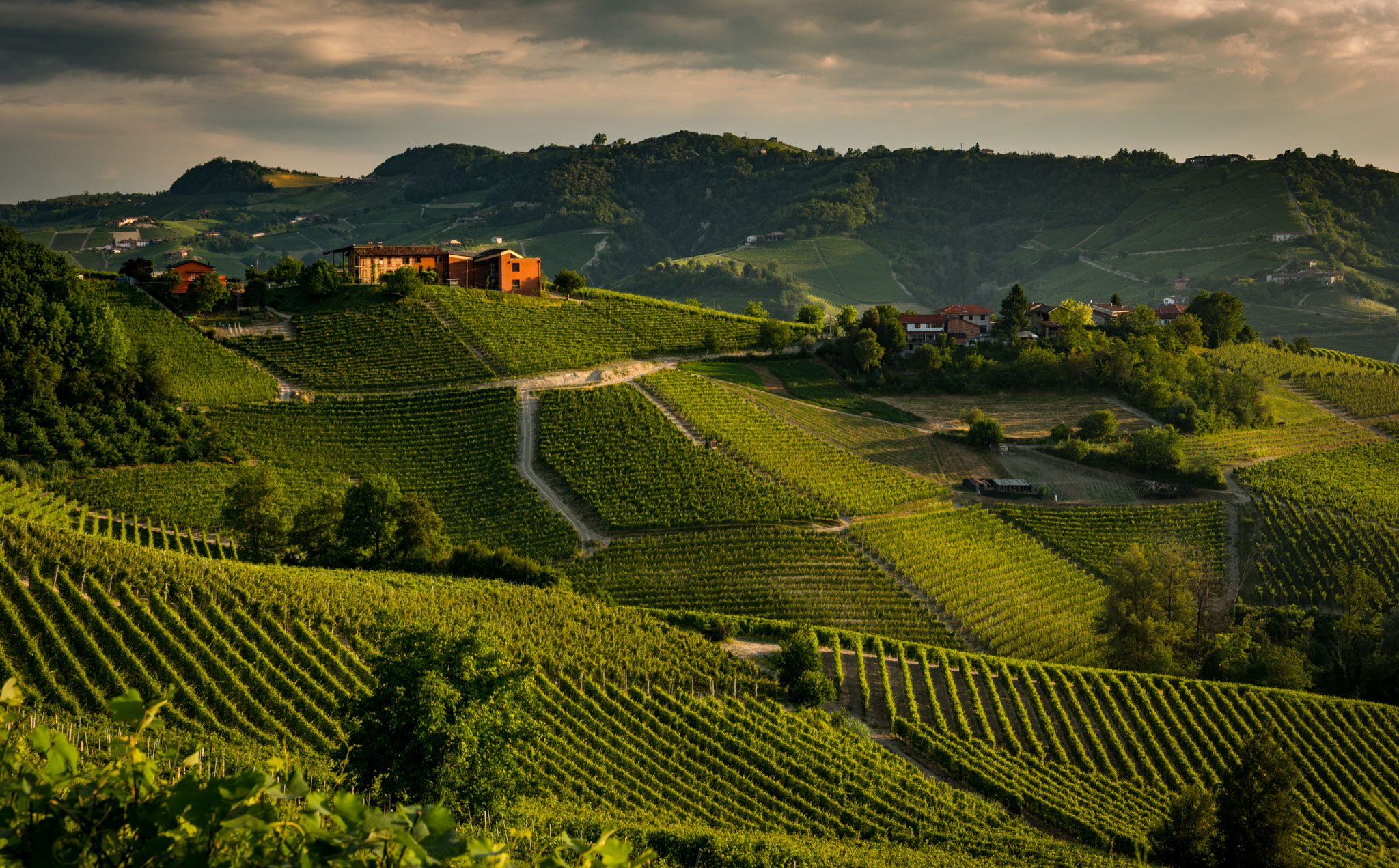 Italy : Piedmont : Portions of Lazzarito and other vineyards in Serralunga d'Alba