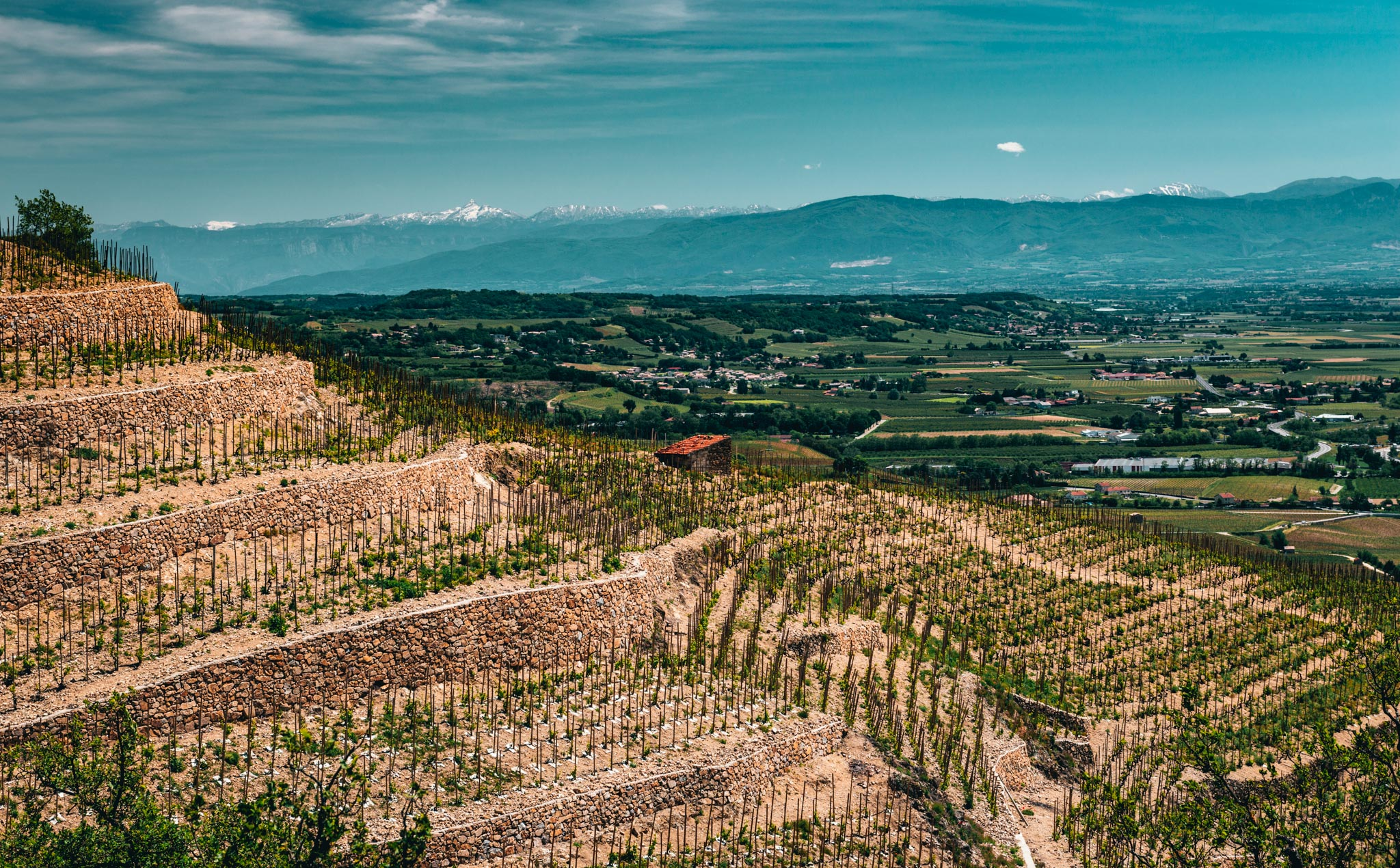 France : Northern Rhone : Hermitage and the Alps