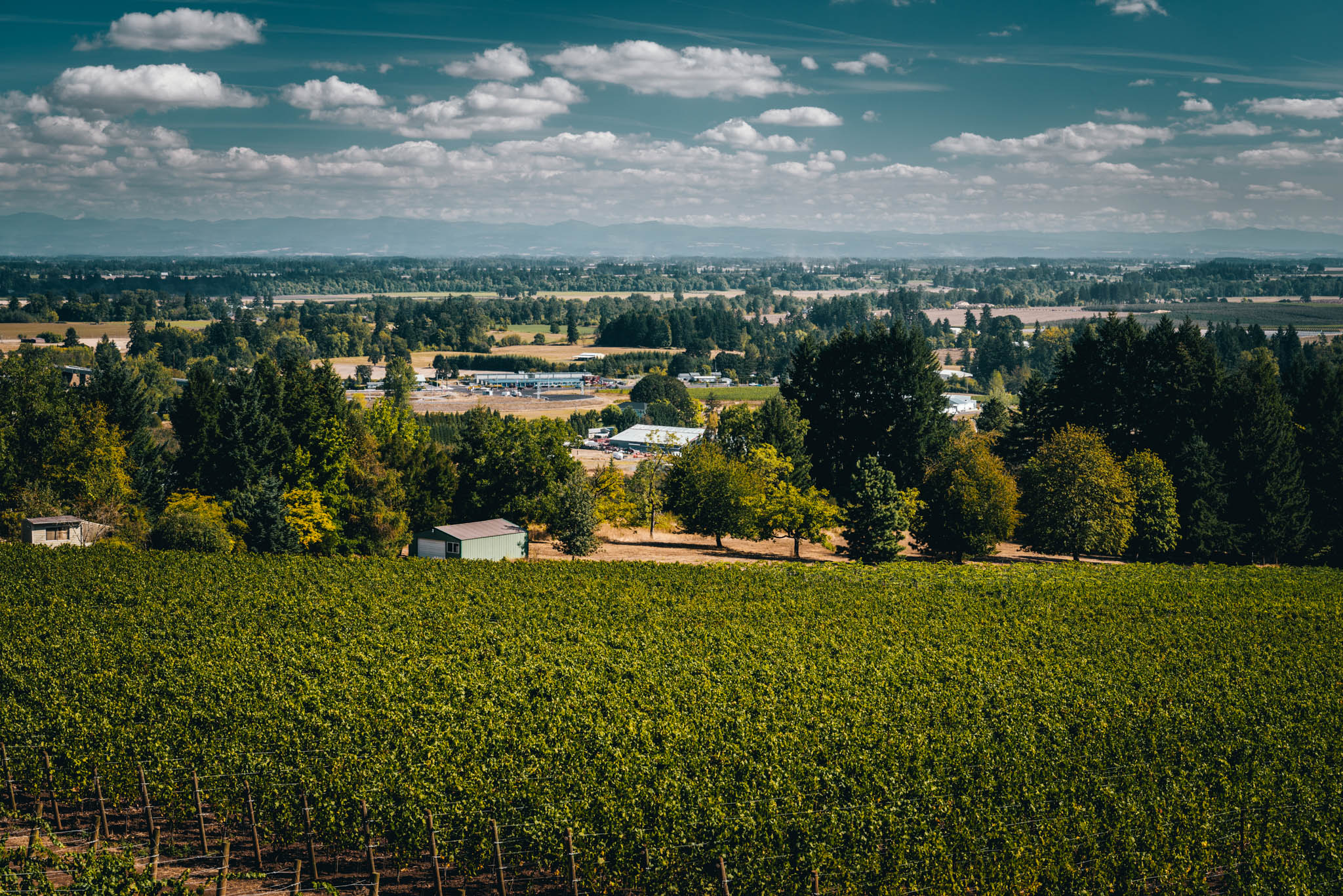 US : Oregon : The view at Domaine Roy in Dundee