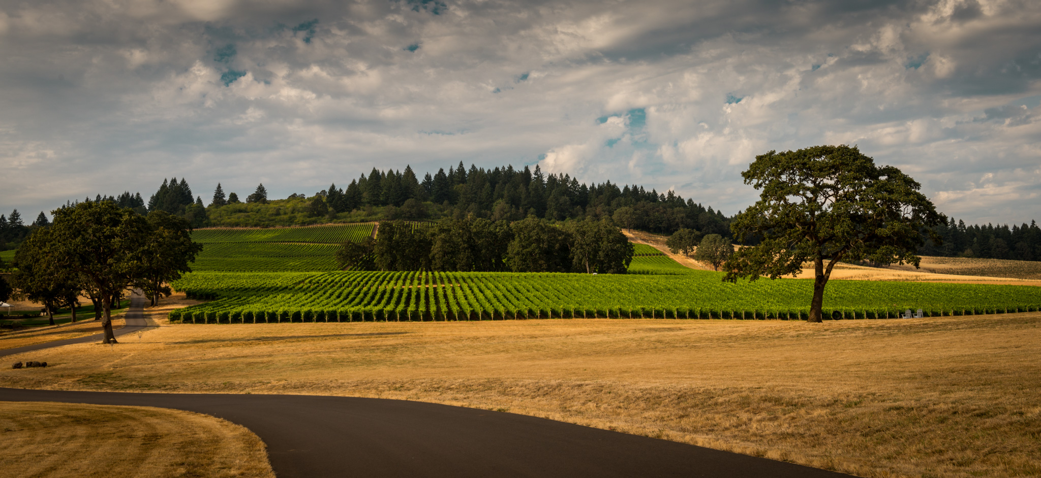 US : Oregon : Vineyards around Stoller's winery in the Dundee Hills AVA