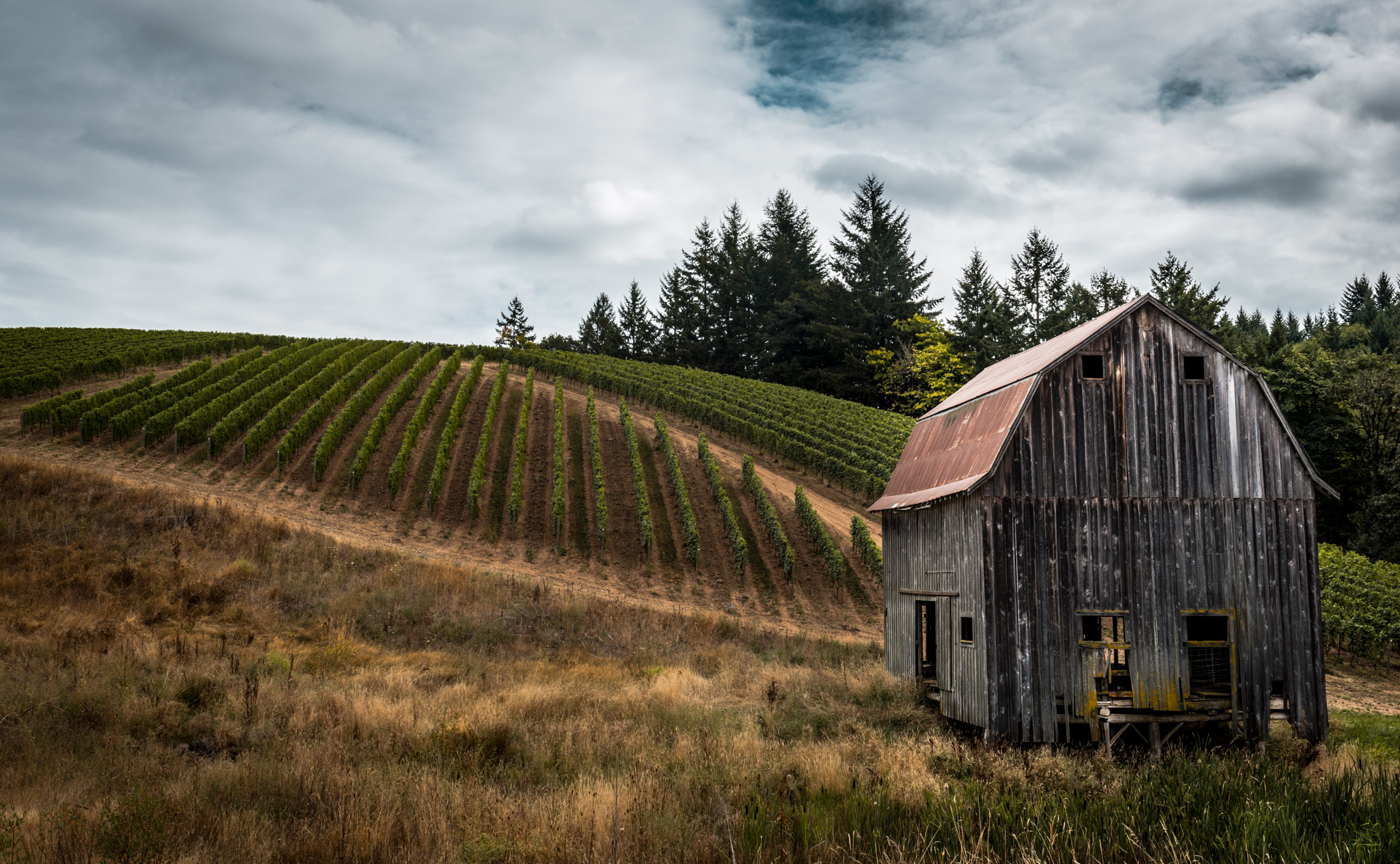 US : Oregon : At the base of Colene Clemens' estate in the Chehalem Mountains AVA