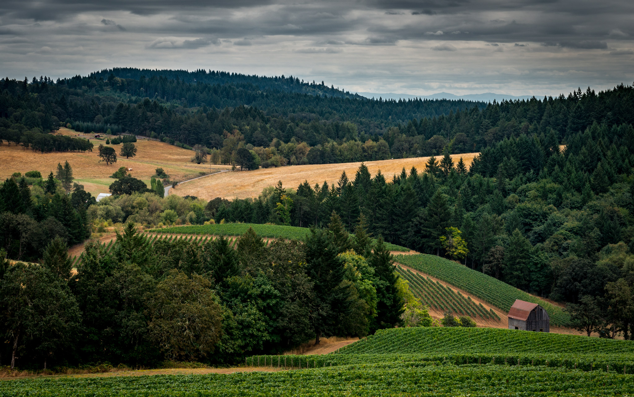 US : Oregon : Vineyards surrounding Colene Clemens in the Chehalem Mountains AVA