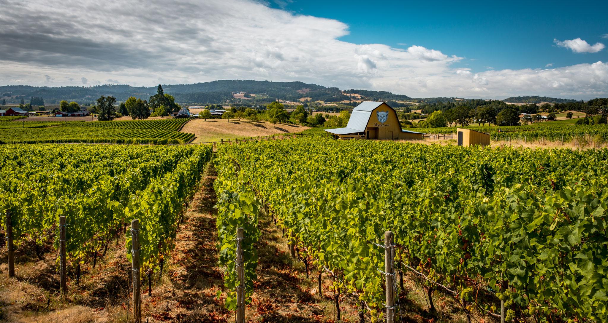 US : Oregon : Vineyards surrounding Bergstrom in the Chehalem Mountains AVA