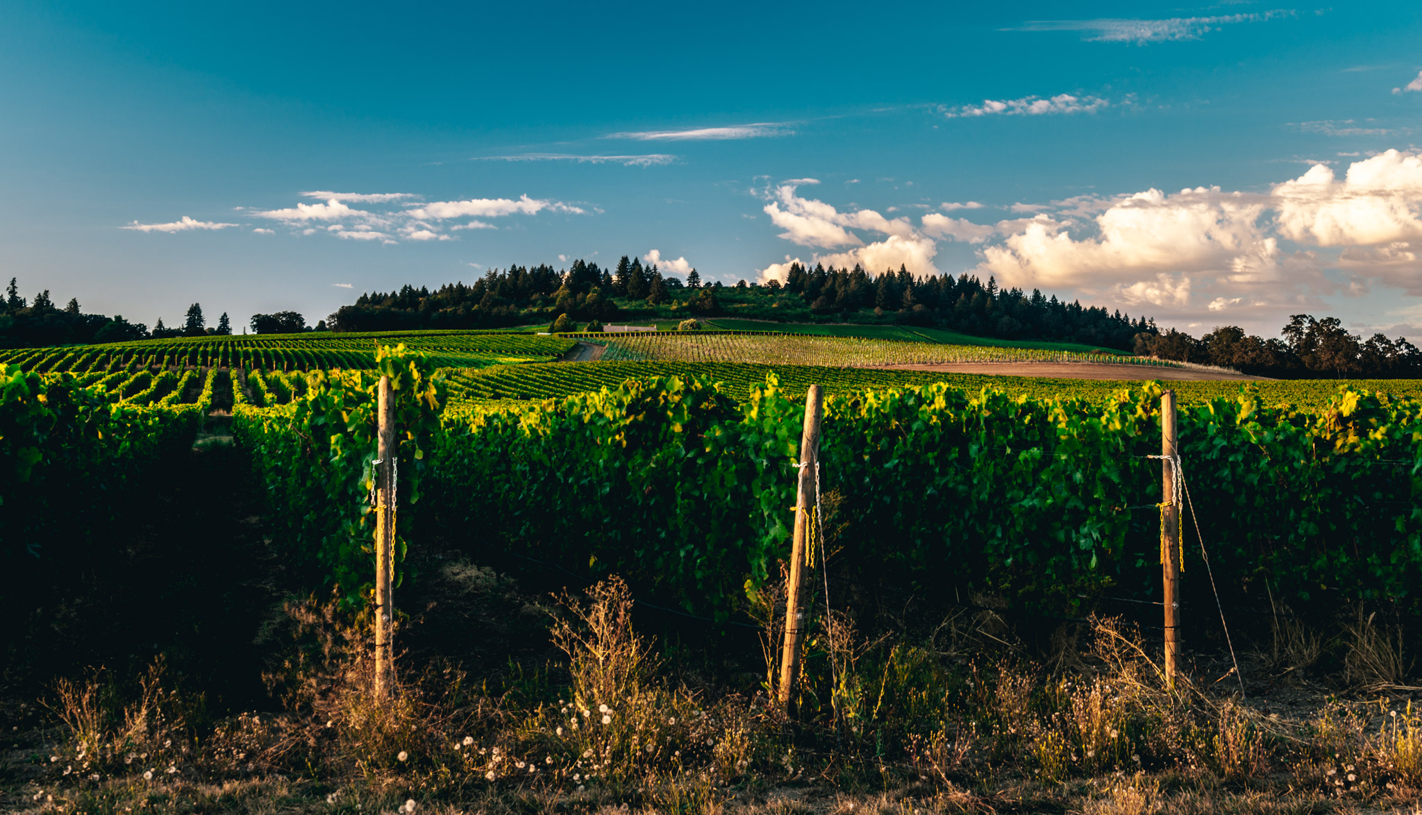 US : Oregon : Late afternoon in the Willamette Valley