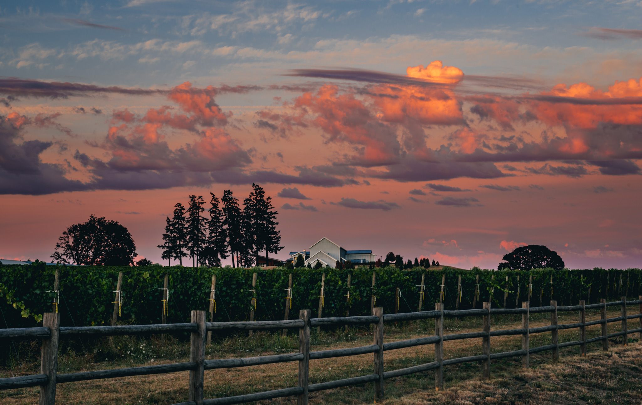 US : Oregon : Early evening in the Dundee Hills AVA
