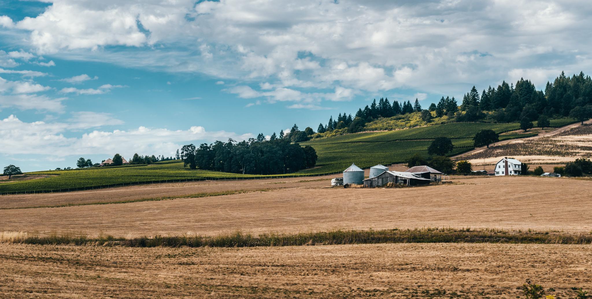 US : Oregon : Dundee Hills AVA